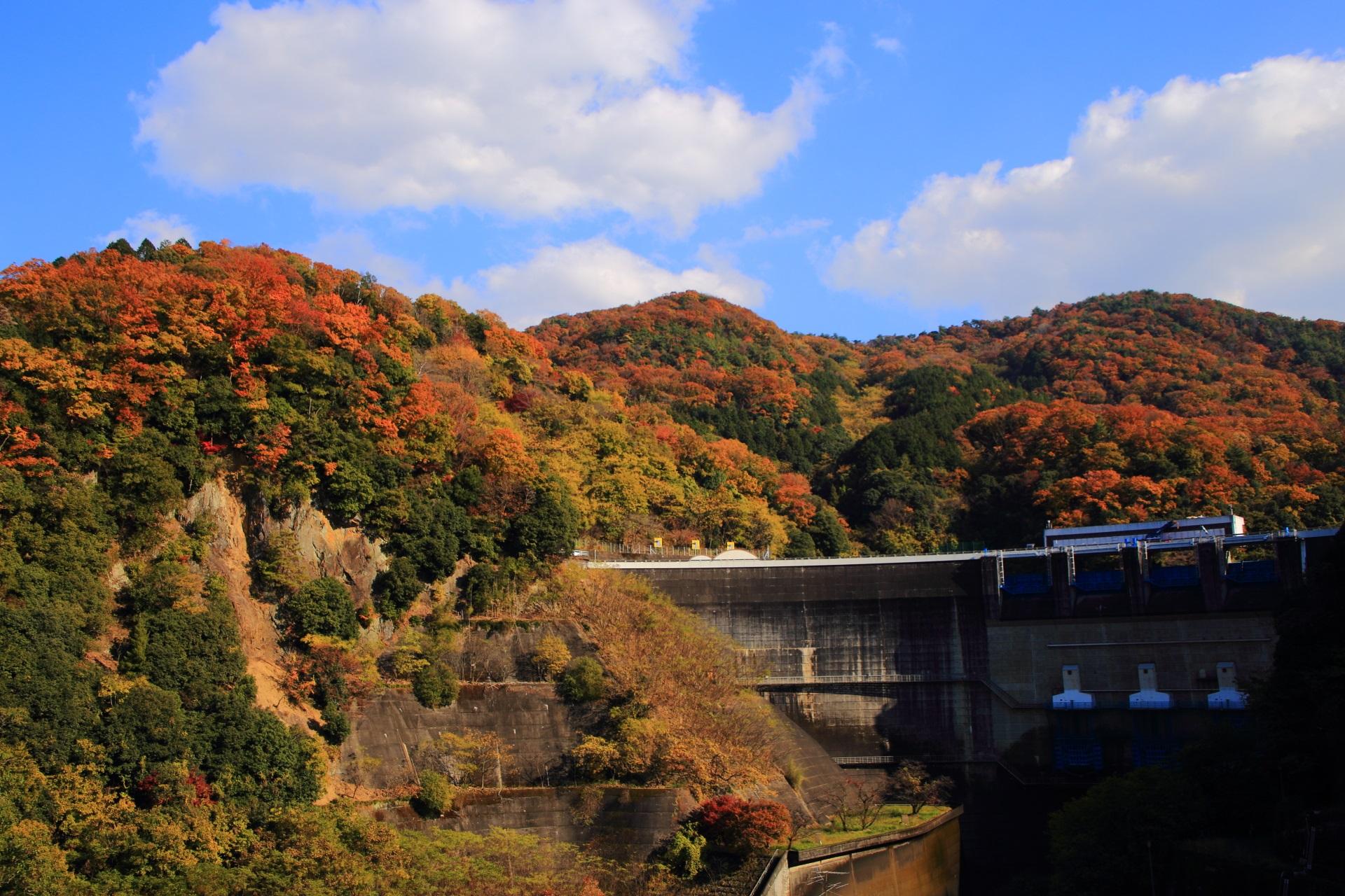 天ヶ瀬ダムの後ろにそびえる秋色の山々