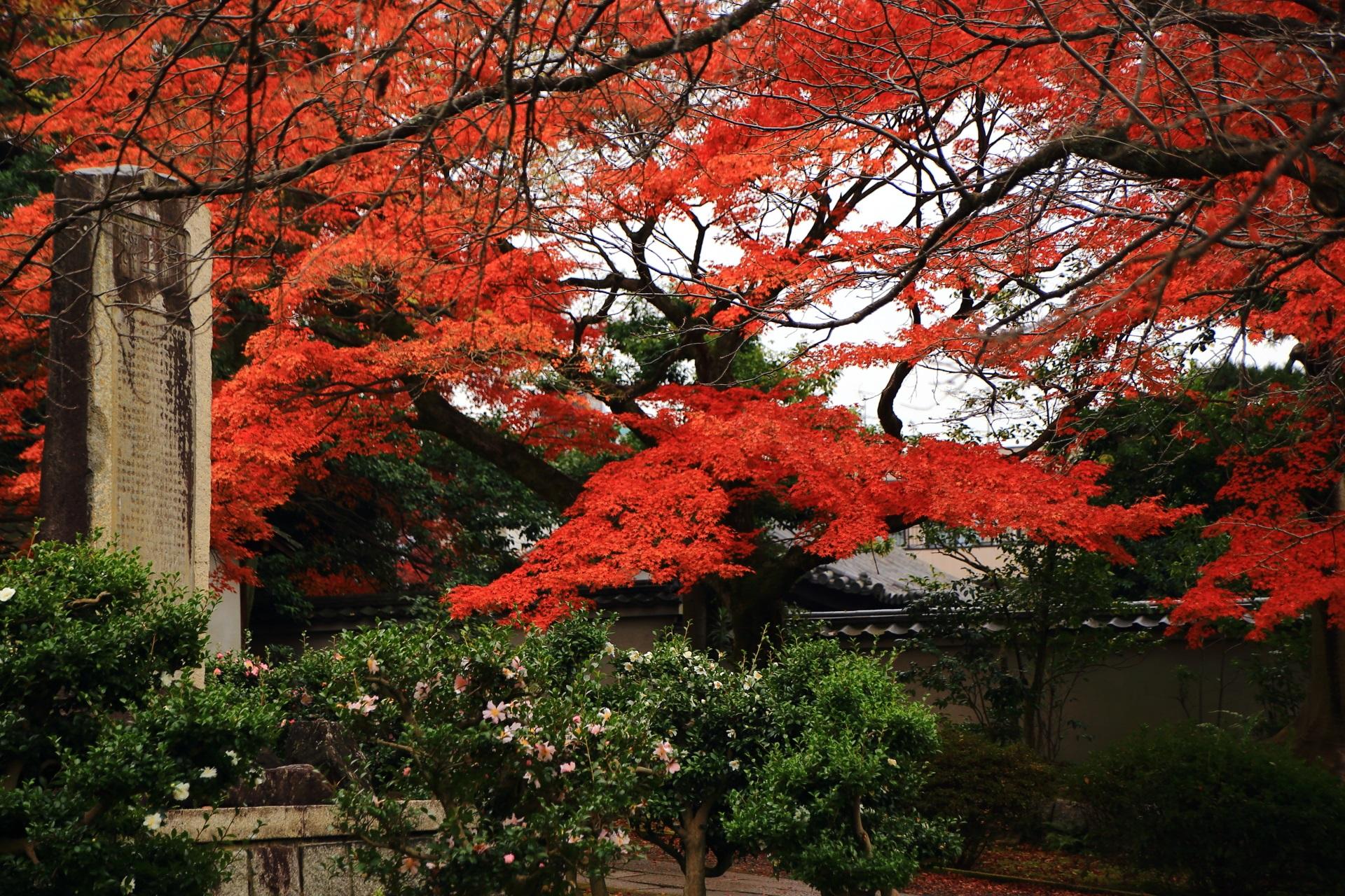 可愛いピンクや白の山茶花の花と優雅な紅葉