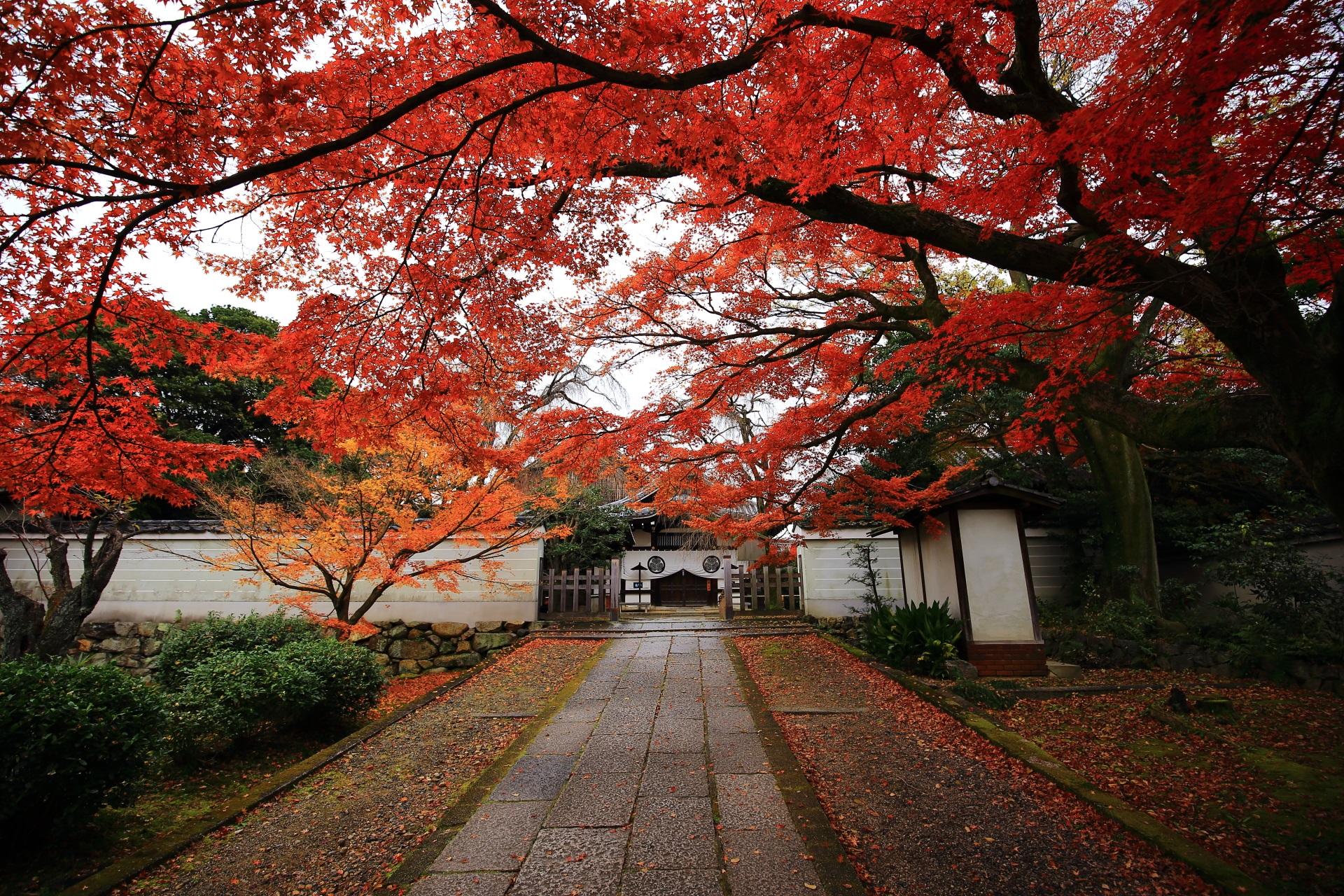 玄関前の絵になる秋の風景