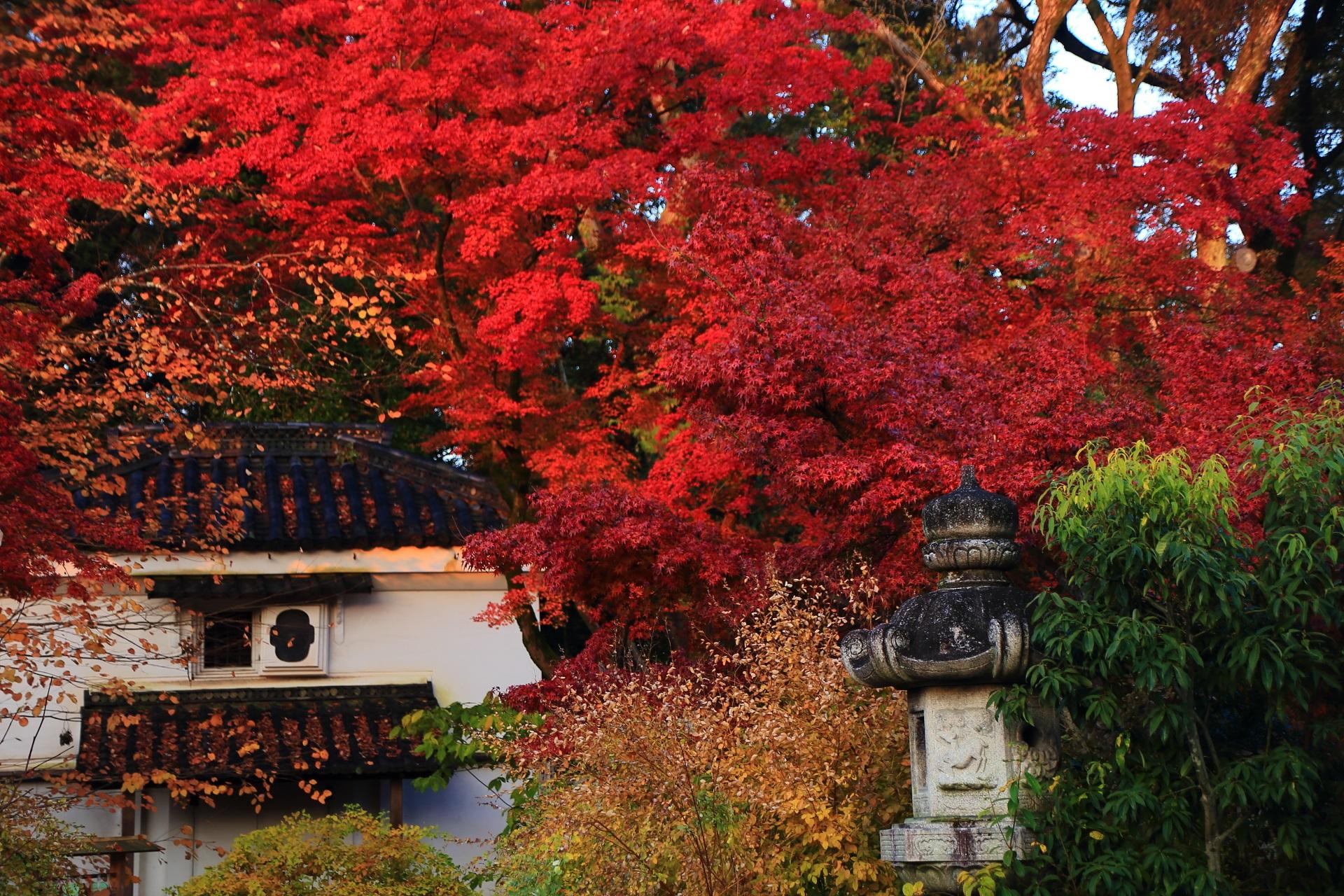 梨木神社の白壁の土蔵に映える炎のような真っ赤な紅葉