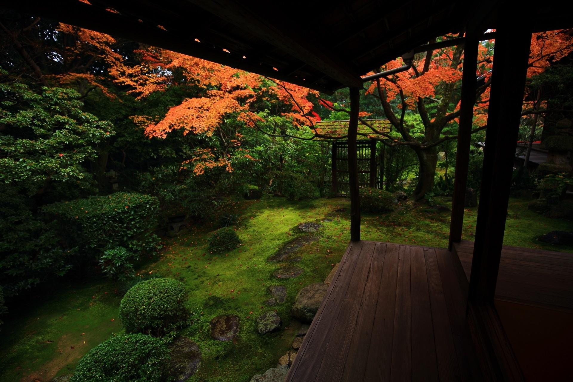 多様な緑を華やぐ桂春院の煌く紅葉
