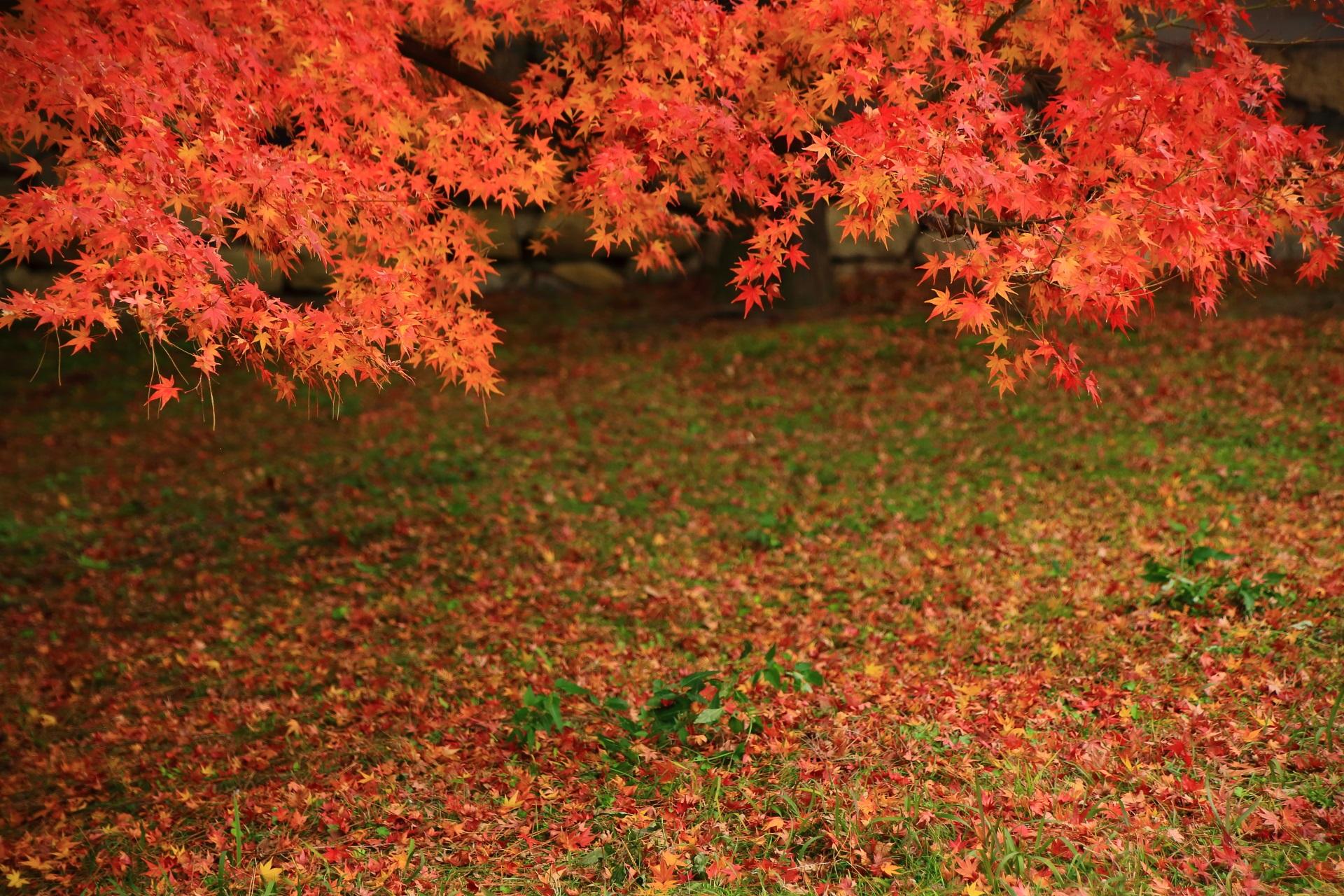 煌く紅葉と華やかな散もみじ