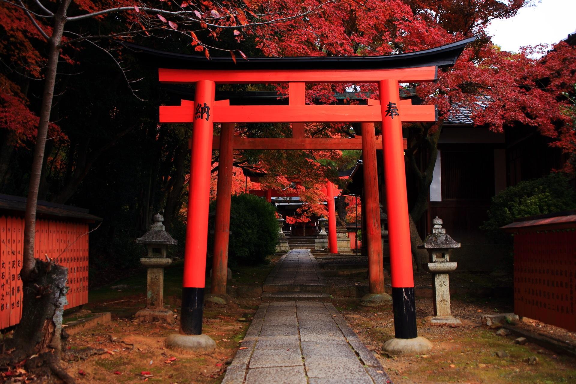 竹中稲荷神社の参道と鳥居の紅葉