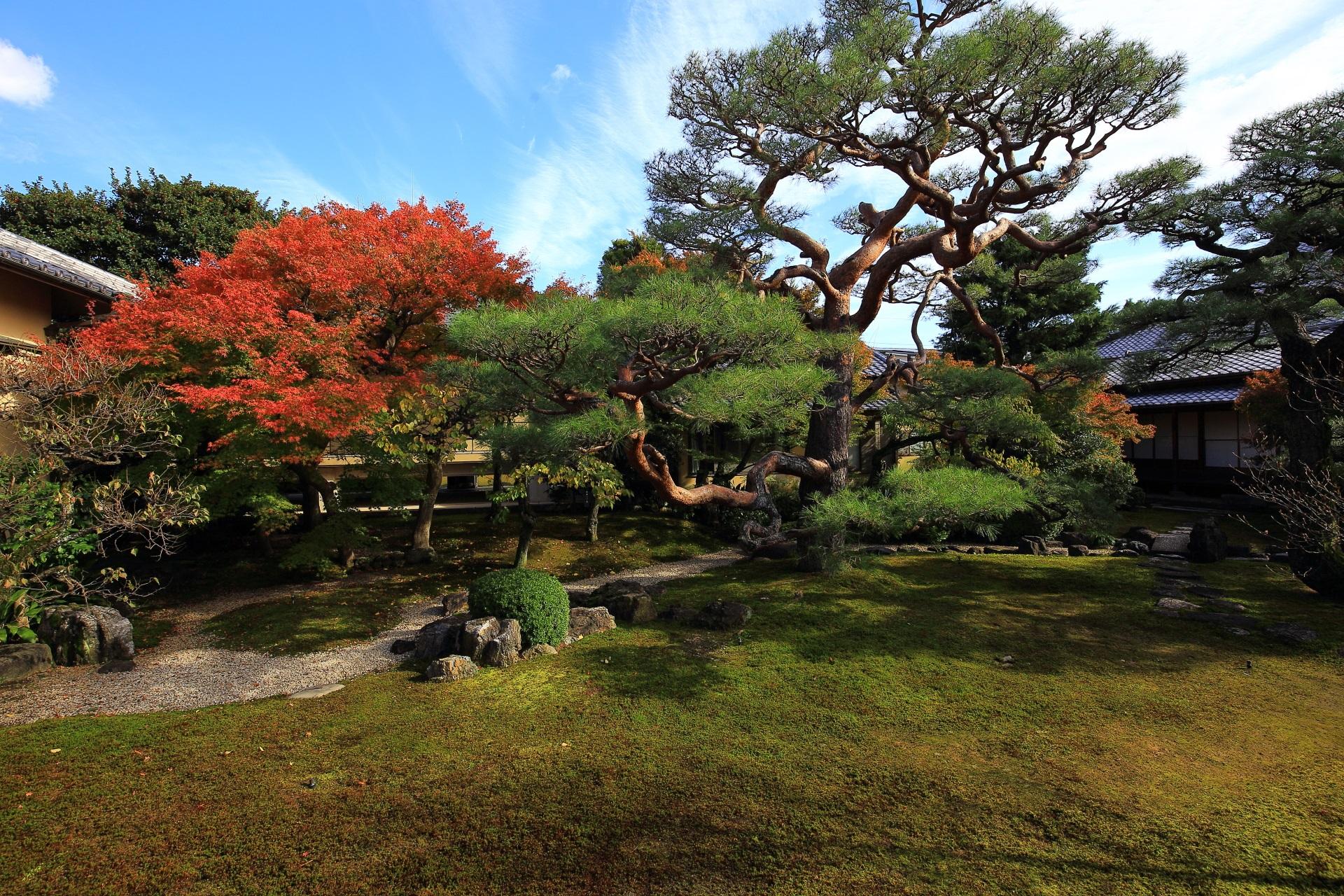 妙顕寺の「光琳曲水の庭」の紅葉と松