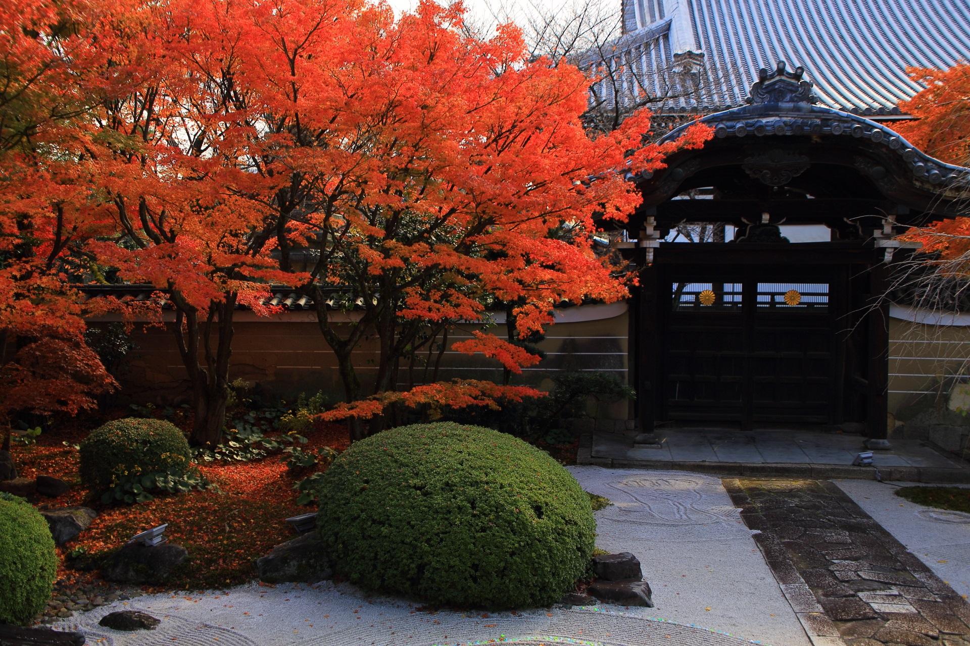 妙顕寺の勅使門を鮮やかに彩る紅葉