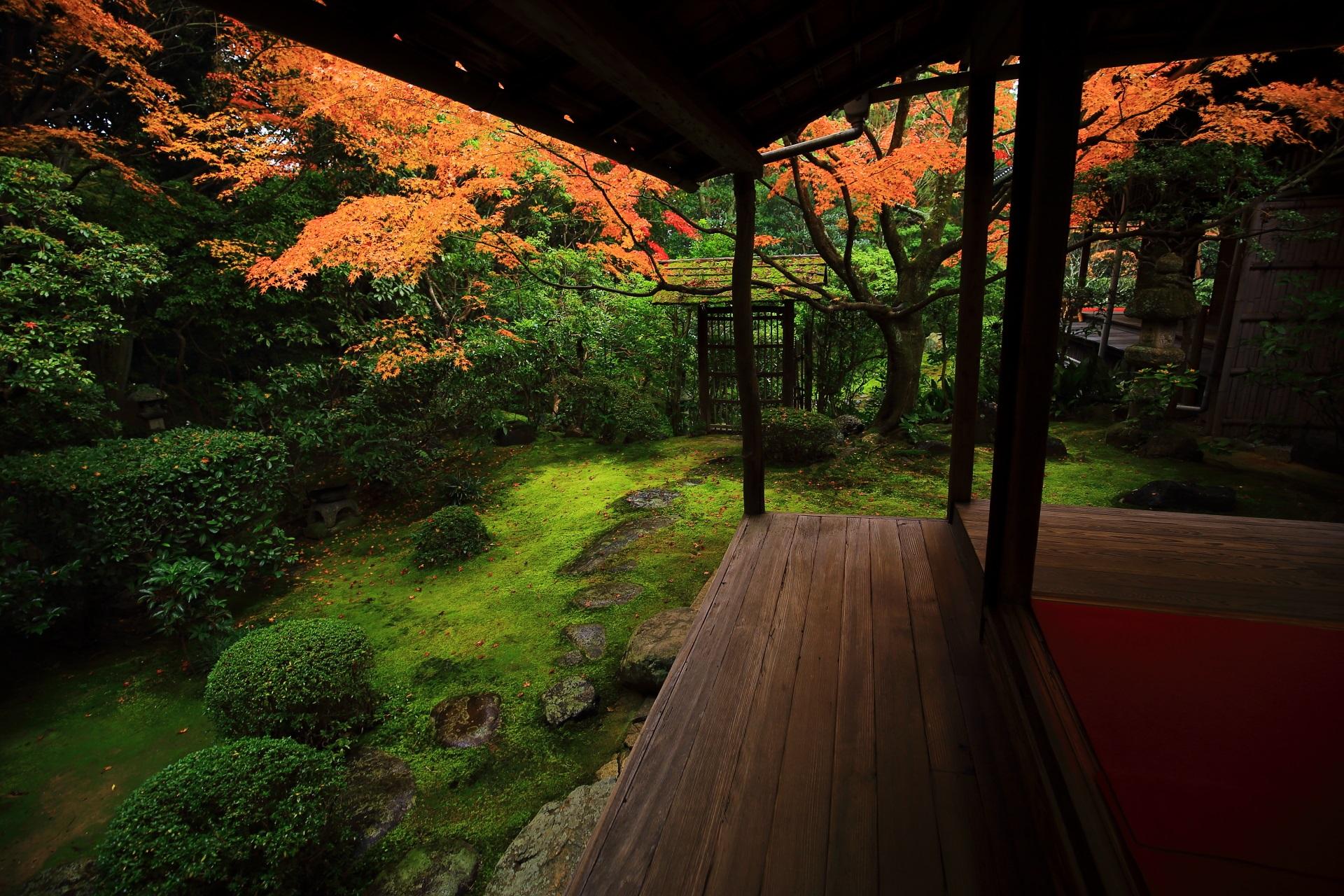 桂春院の美しい苔や緑を華やぐ見ごろの紅葉