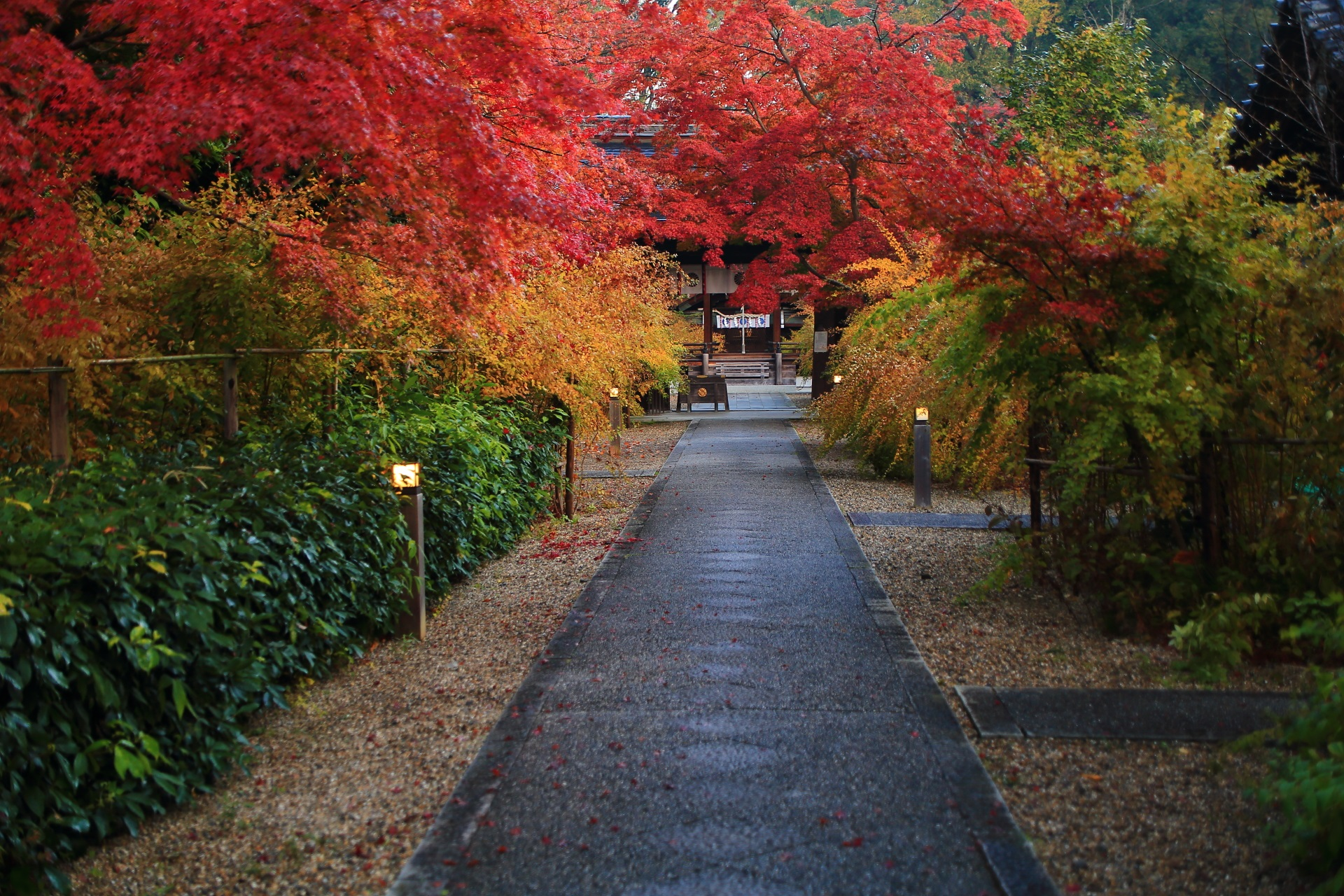 もみじや楓だけではなく萩の紅葉にも染まる梨木神社の参道