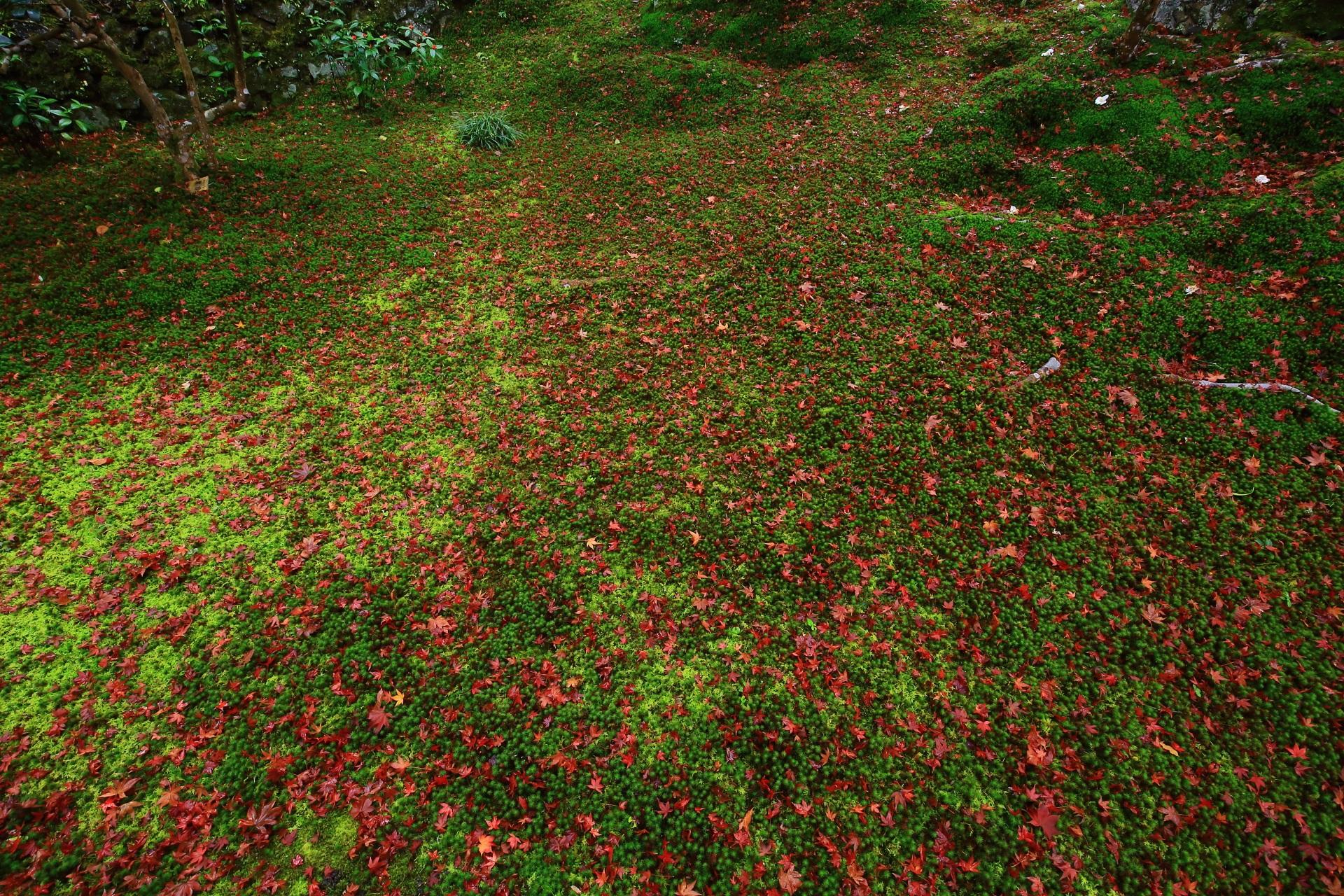 見事な苔を上品に彩る散り紅葉