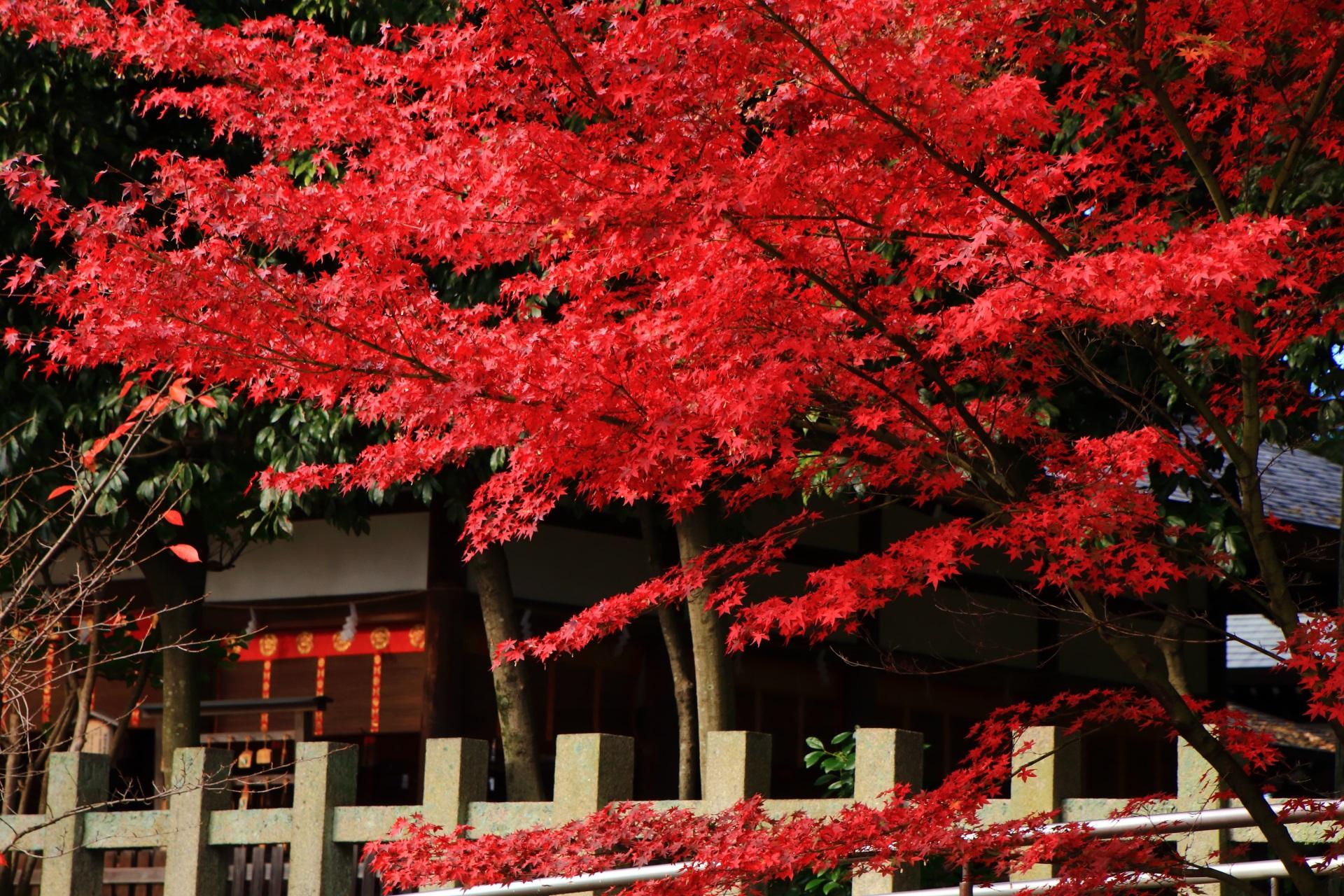 拝殿を秋色に染める華やかな紅葉