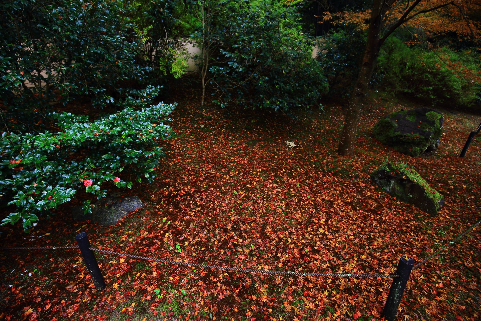 椿の木や岩を彩る溢れる散り紅葉