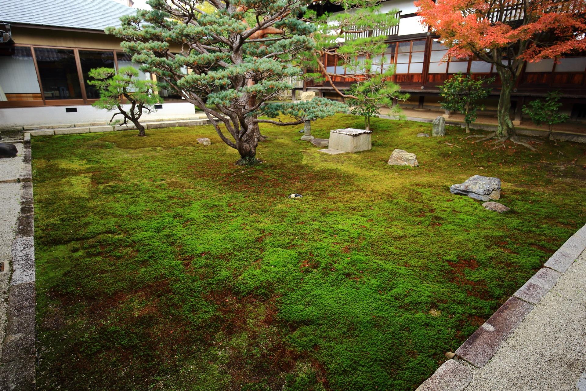 落ち着いた雰囲気のする苔に覆われた妙覚寺の書院中庭