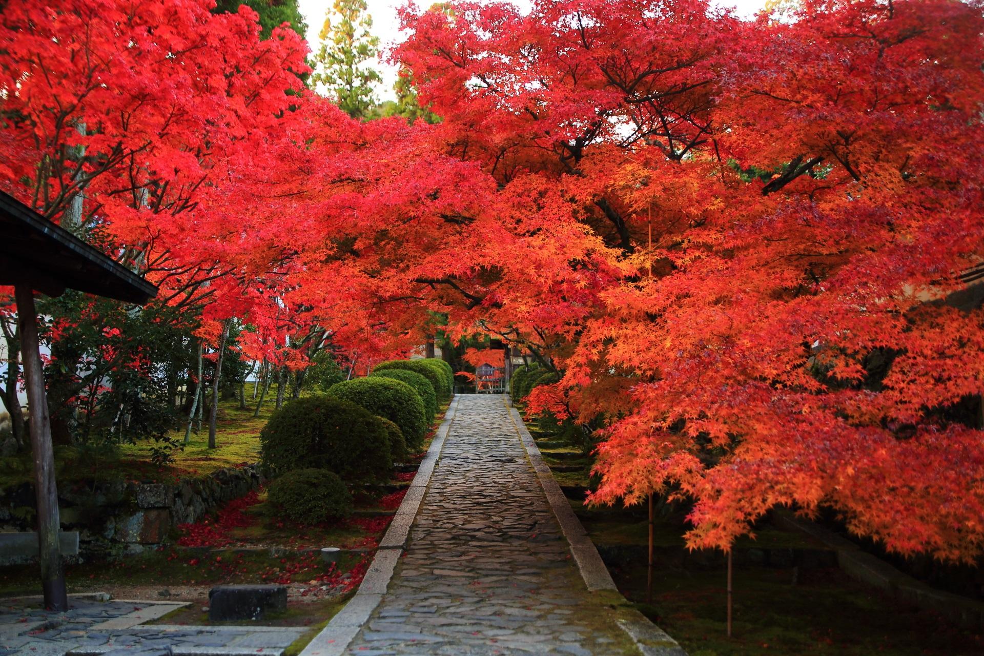 何時間でも見ていたい一休寺の絶品の紅葉