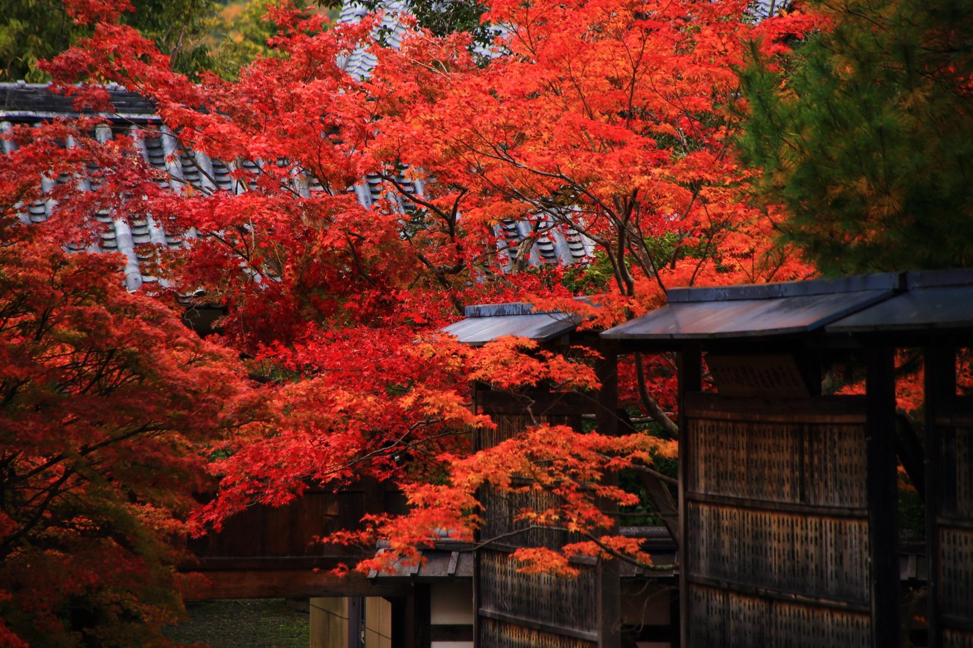 清涼寺の本堂から眺めた絶品の秋の彩り