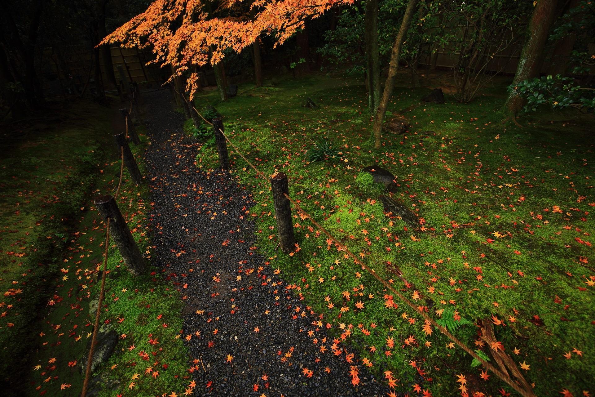 美しい緑の苔に散る可愛いく華やかな散り紅葉