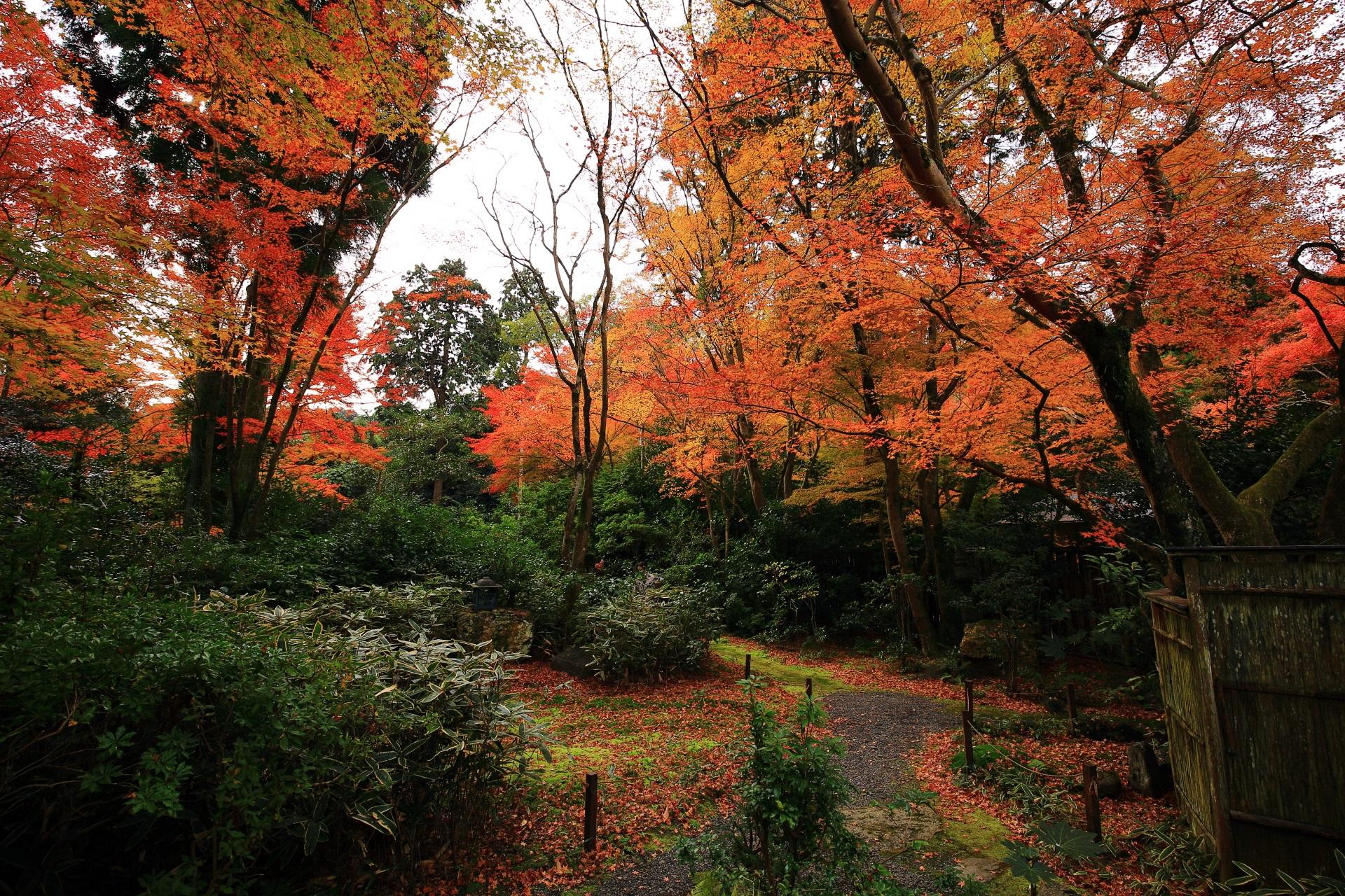 色づきが更に深くなった晩秋の含翆庭