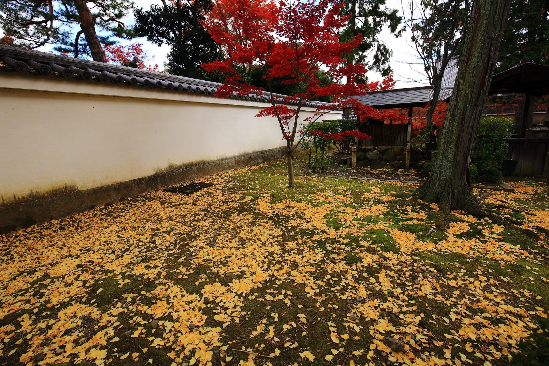 開山堂裏の黄色い散り銀杏と赤い紅葉