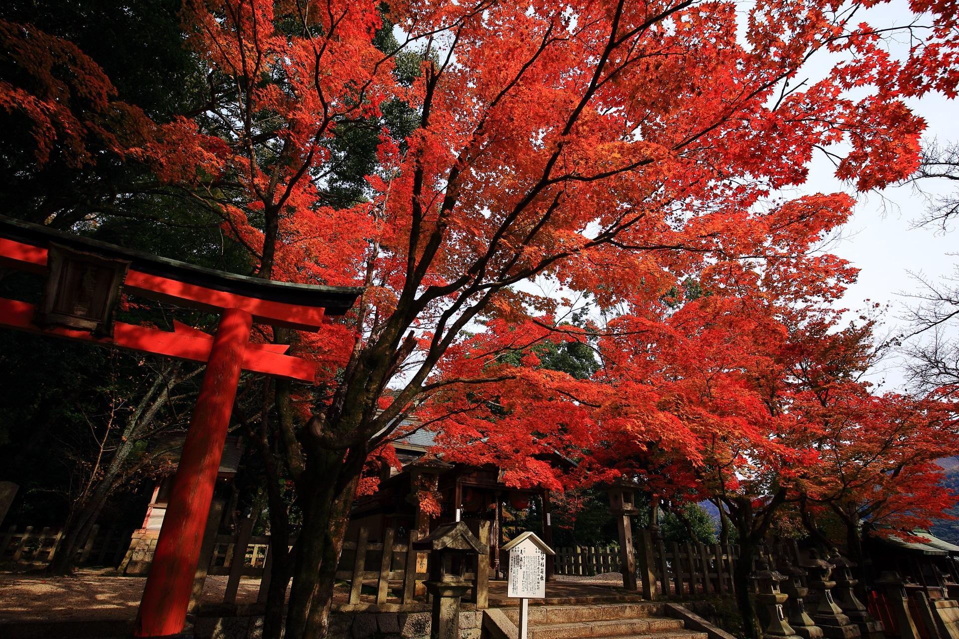 本殿前の溢れ出す見事な紅葉