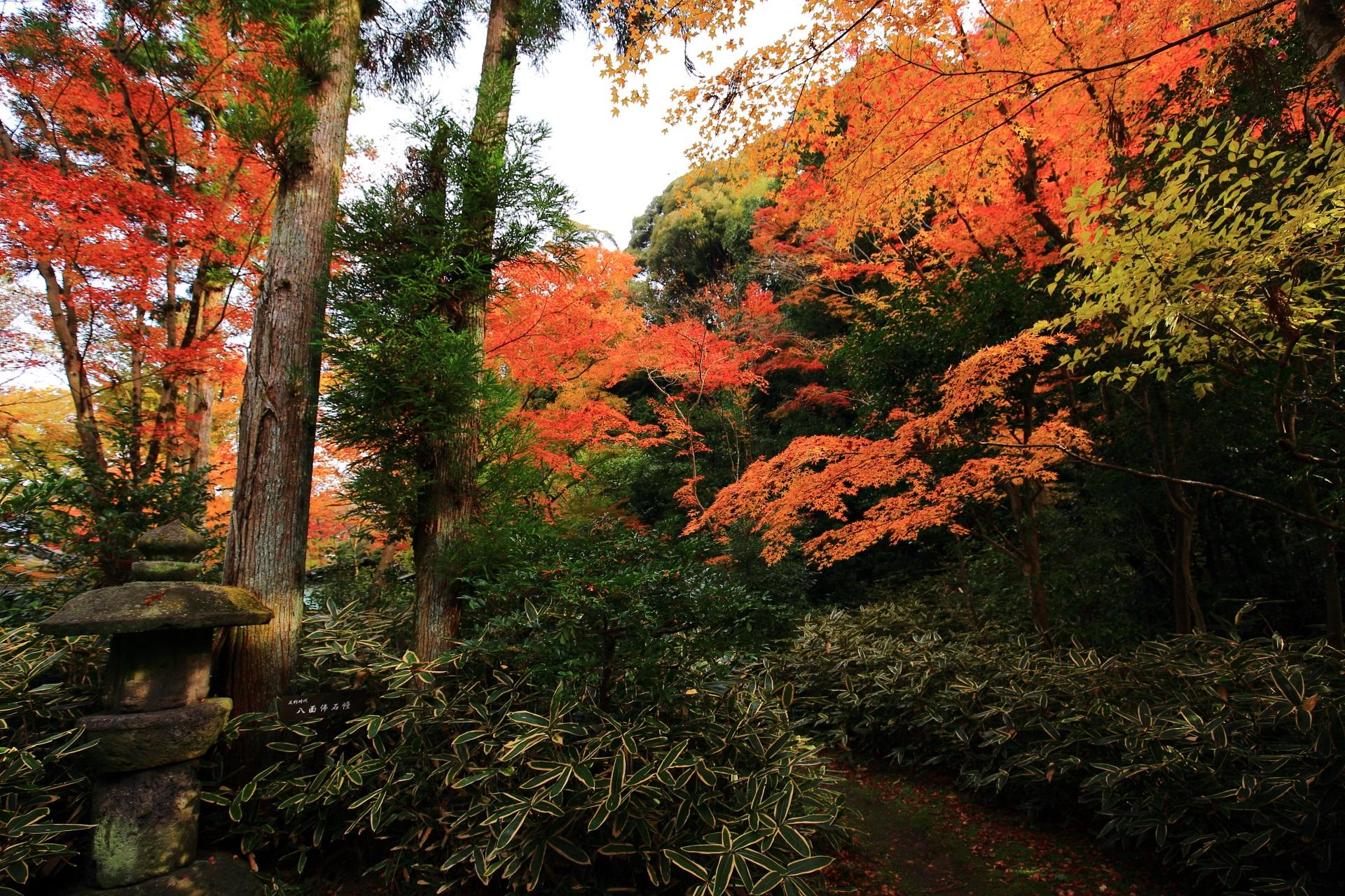 含翠庭の笹や緑や蟷螂などを彩る鮮やかな紅葉