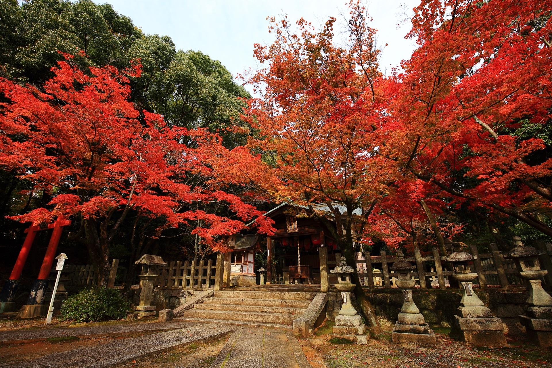 京都最大級の紅葉の穴場の竹中稲荷神社