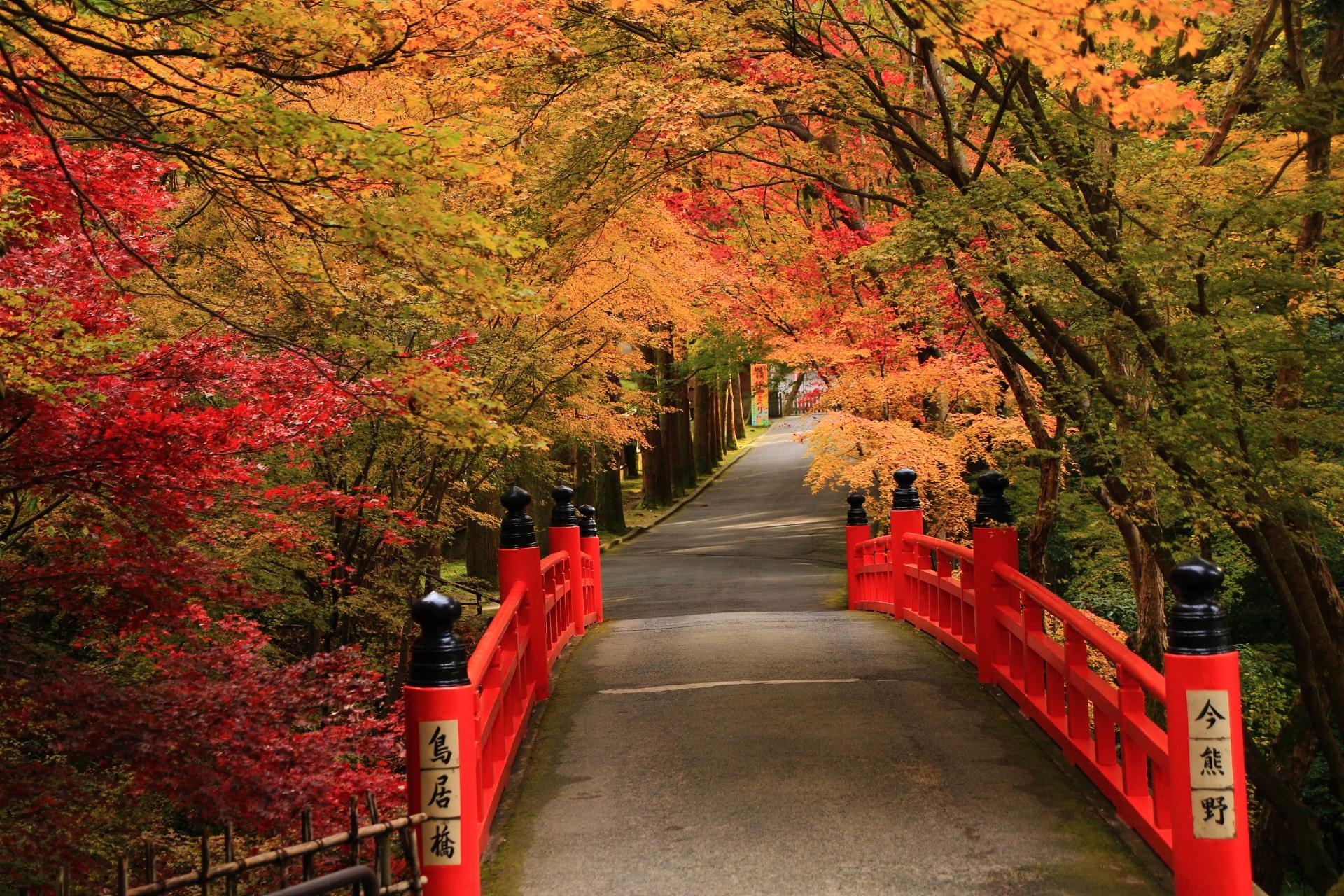 色とりどりに染まる今熊野川に架かる鳥居橋