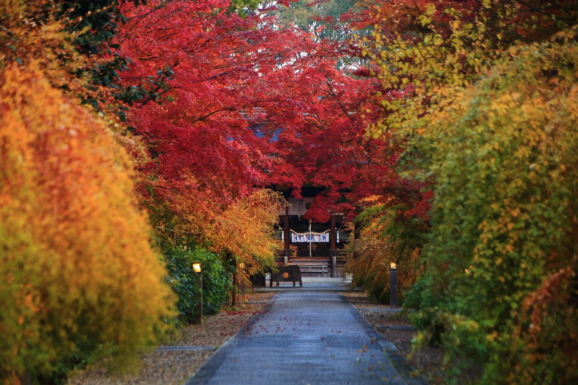 見事な彩りにつつまれる静寂の参道