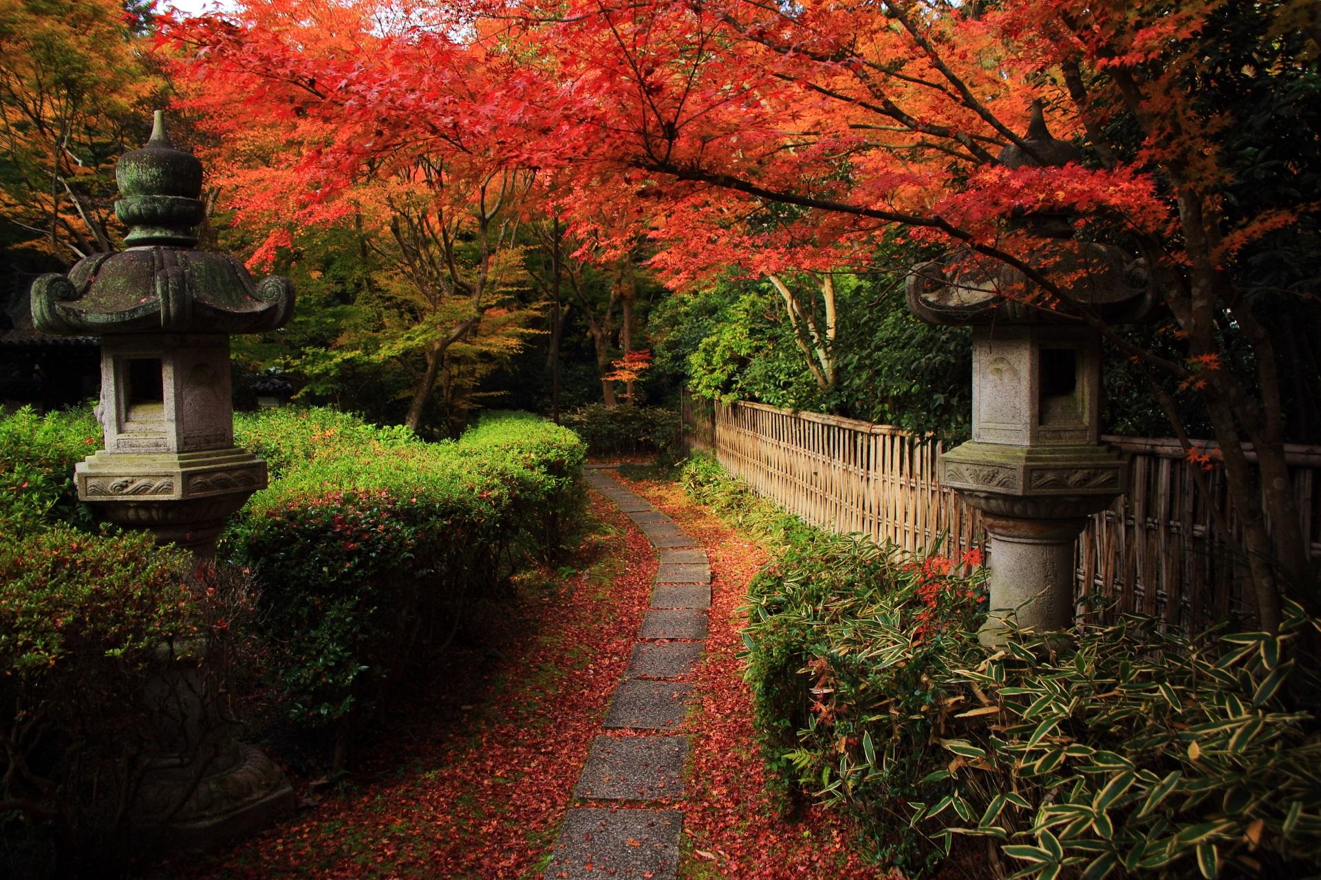 来迎院の鮮やかな紅葉と散りもみじが彩る風情ある参道や竹垣
