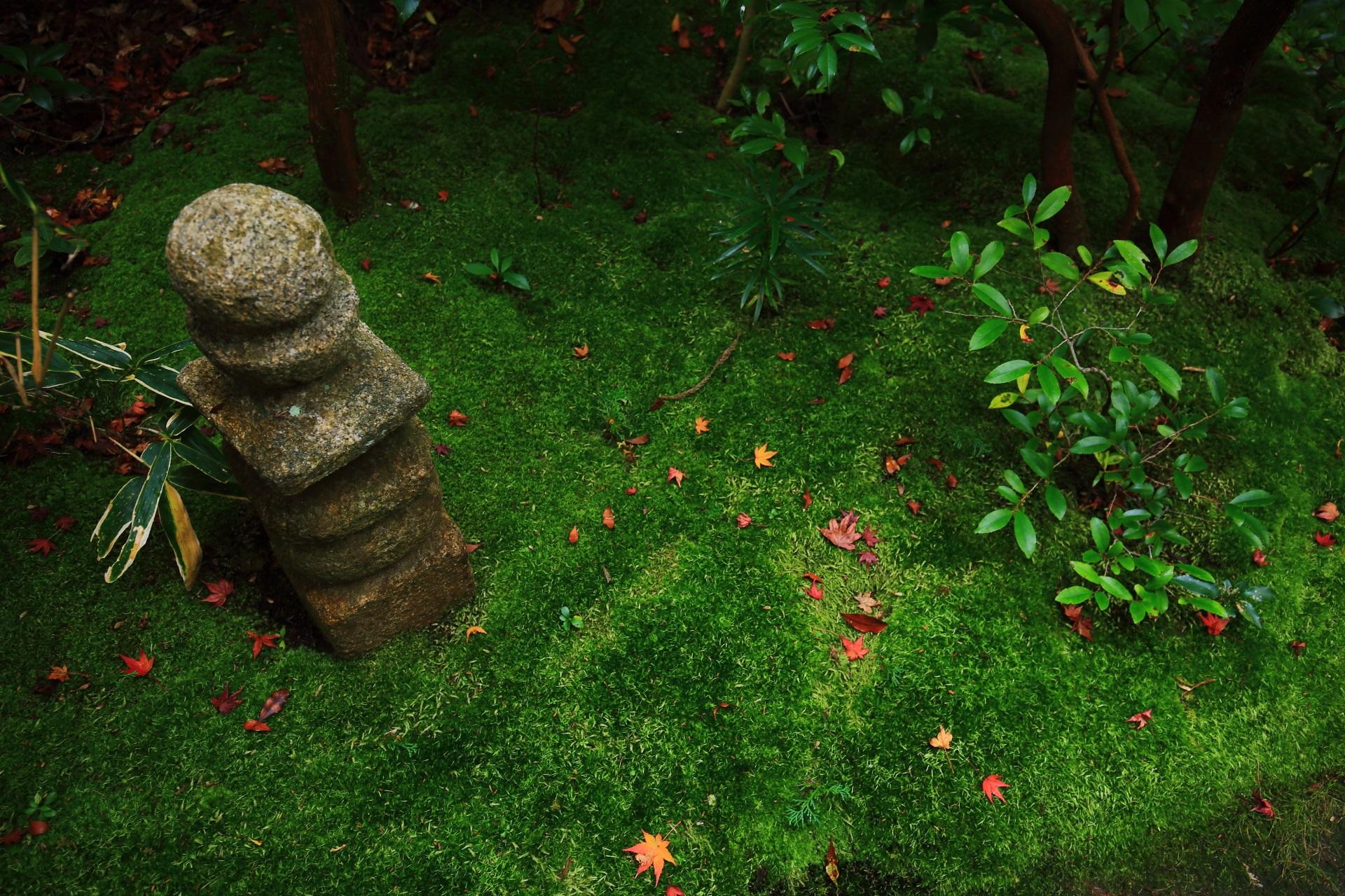 含翠庭の見事な緑の苔と華やかな散り紅葉