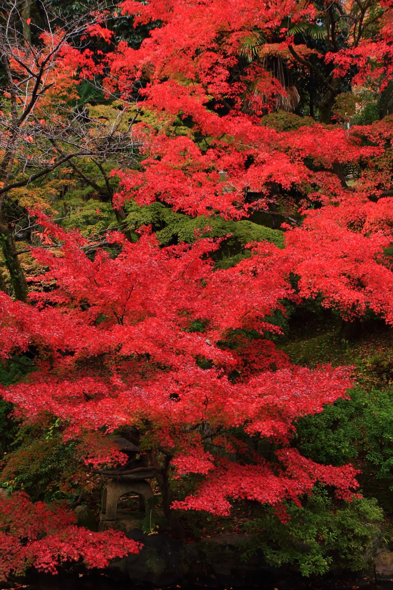 大谷本廟の豪快に色づく圧巻の紅葉