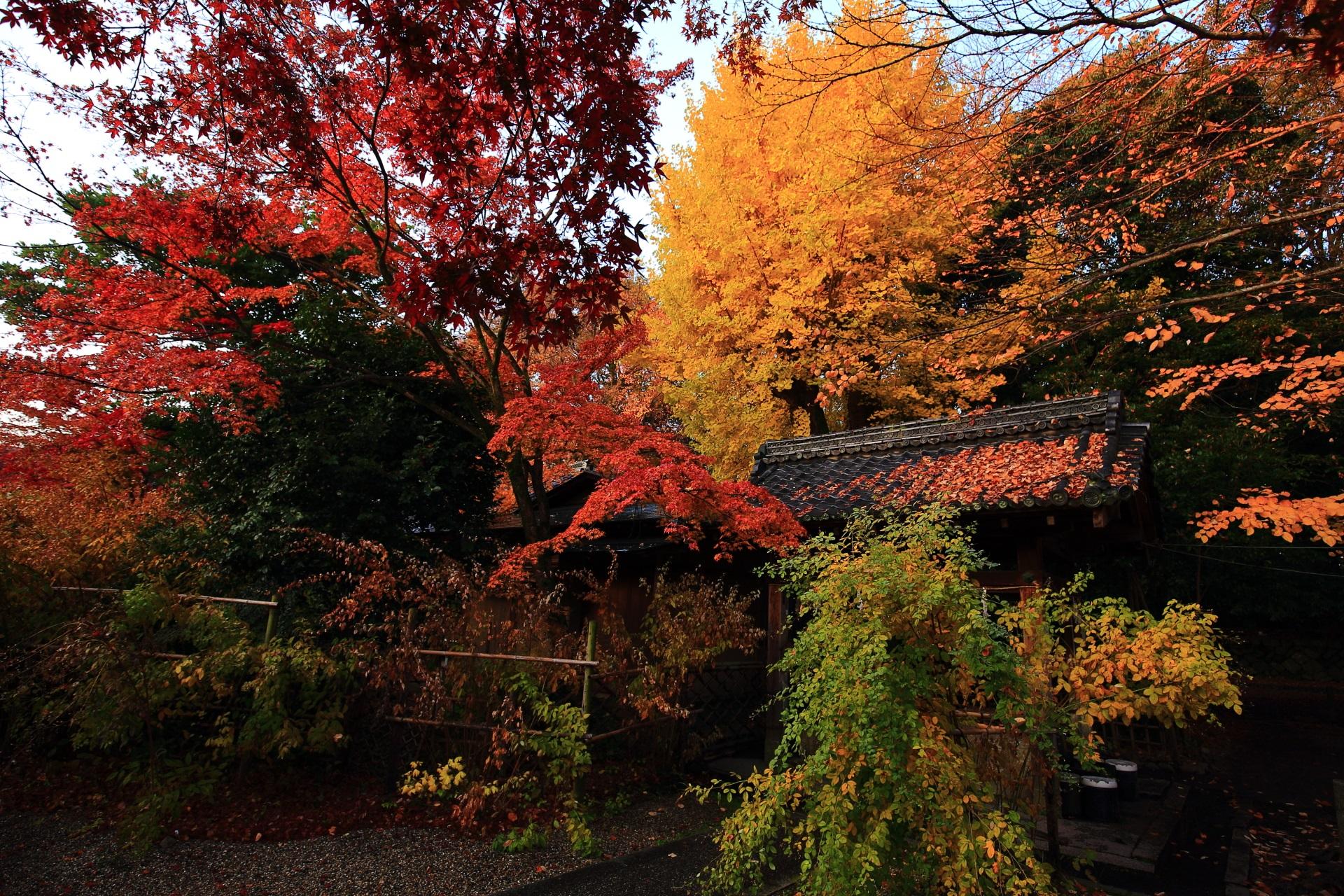 染井の水を染める黄色く輝く銀杏と多彩な紅葉