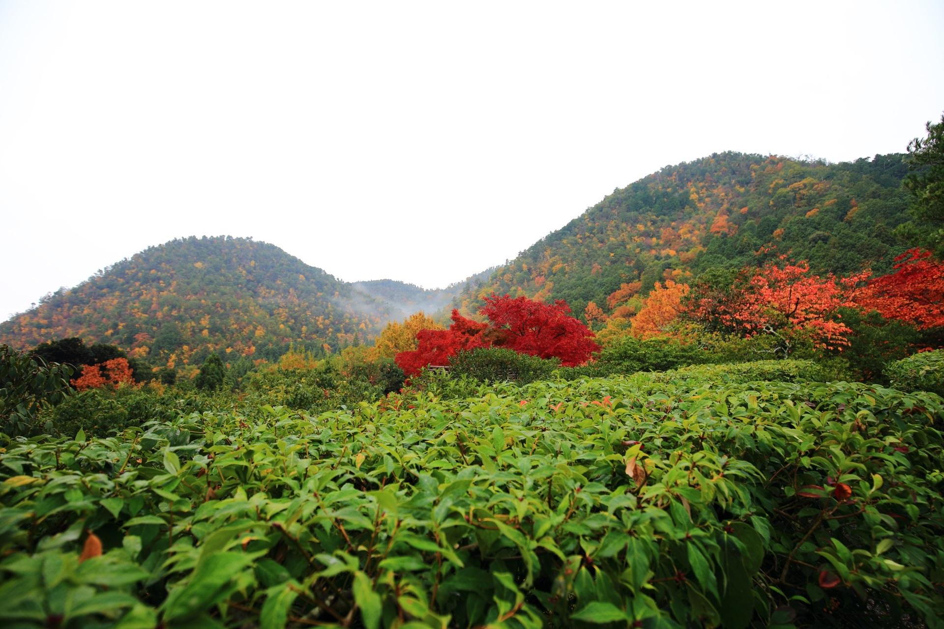 秋の彩り染まる鷹が峰