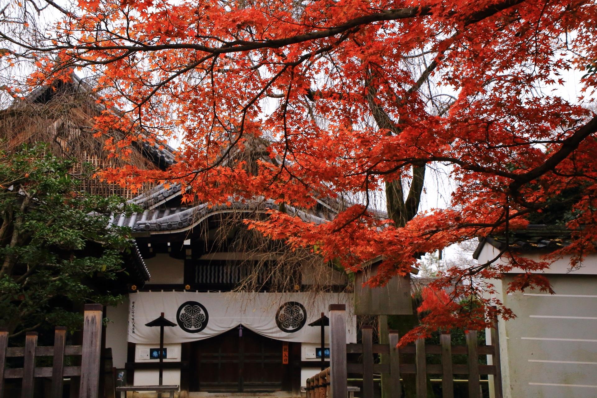 養源院の本堂と寺紋のかかる玄関をつつむ深い秋色の紅葉