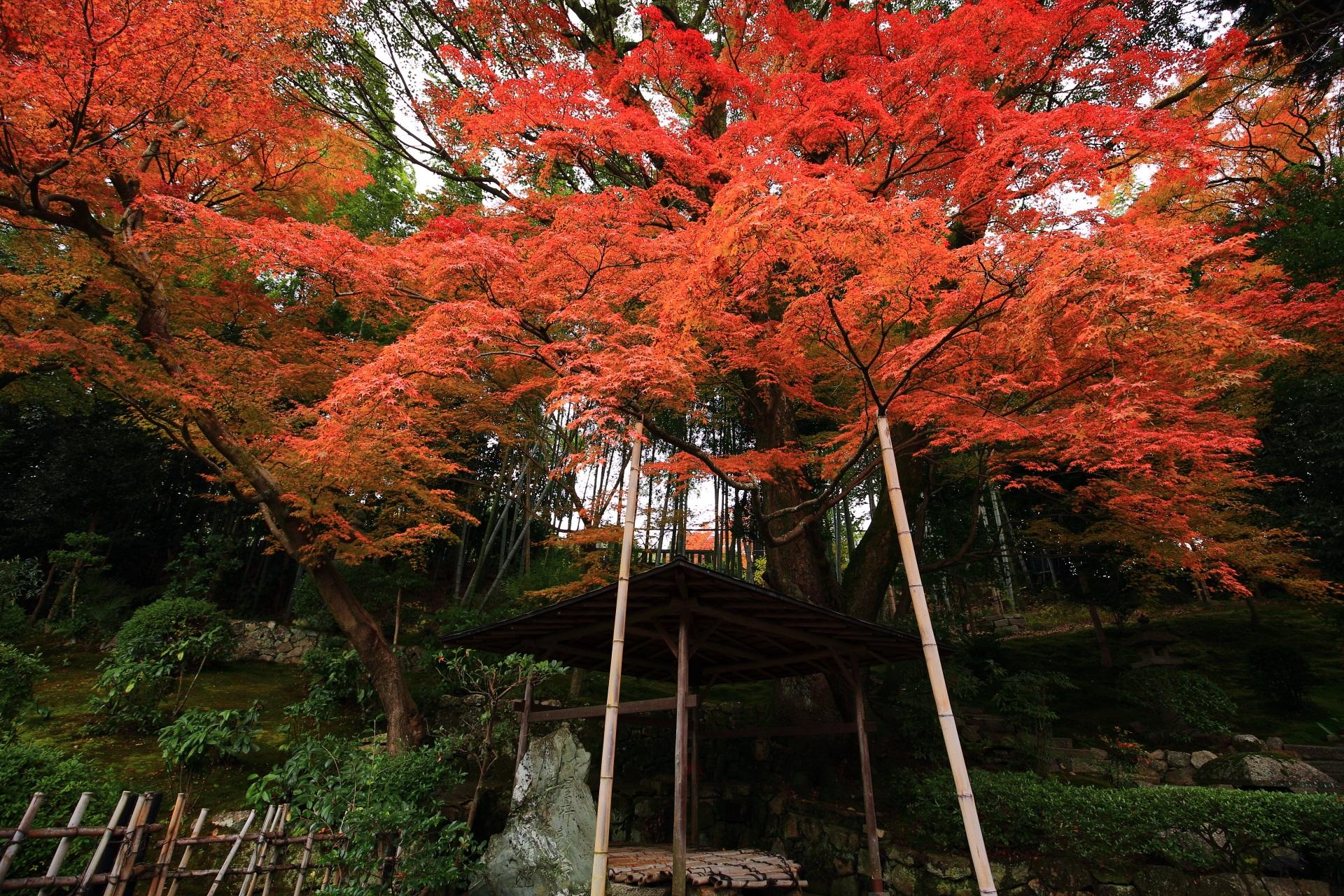井戸の上で優雅に色づく紅葉