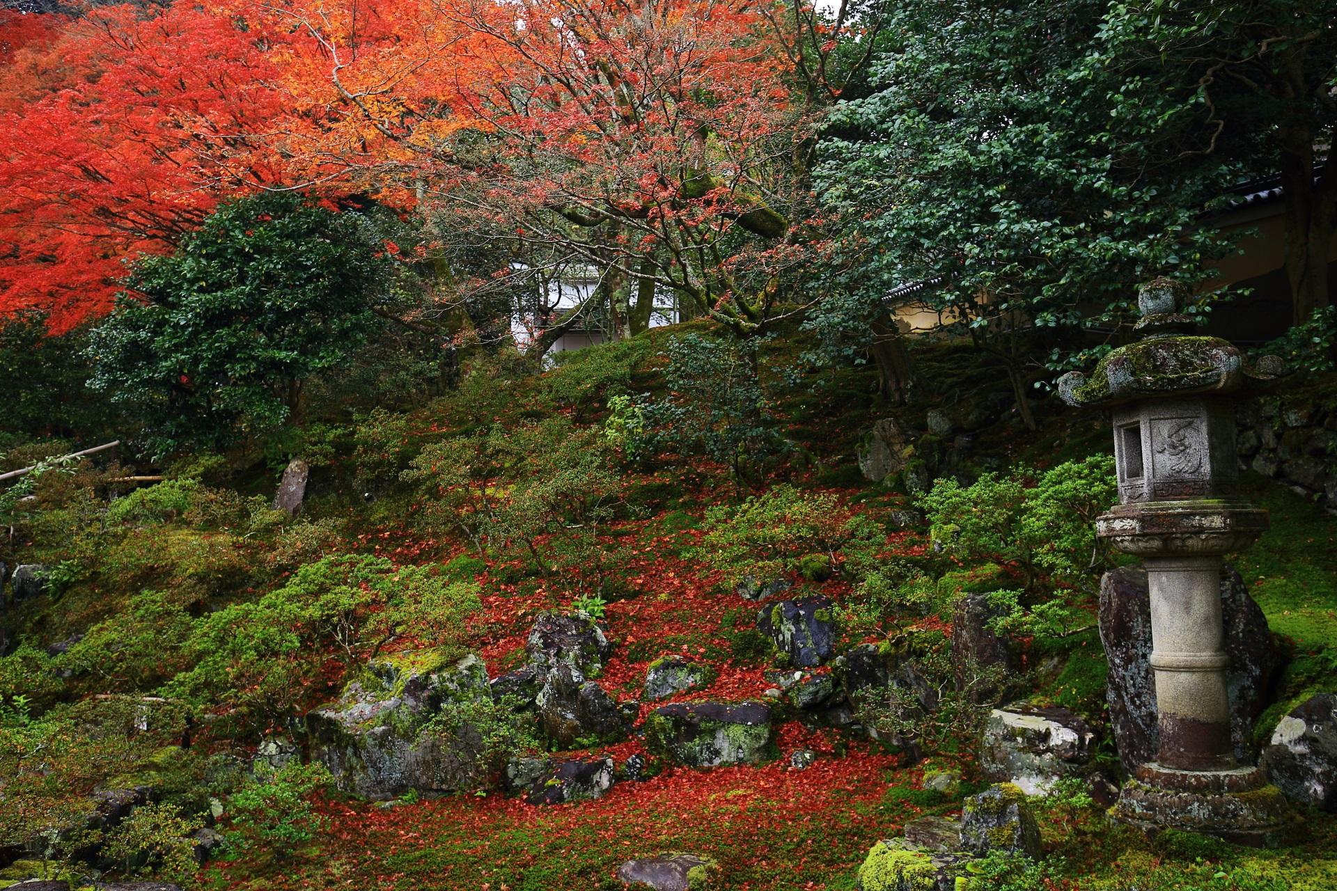 岩や燈籠が配された落ち着きのある庭園と溢れる紅葉や散りもみじ