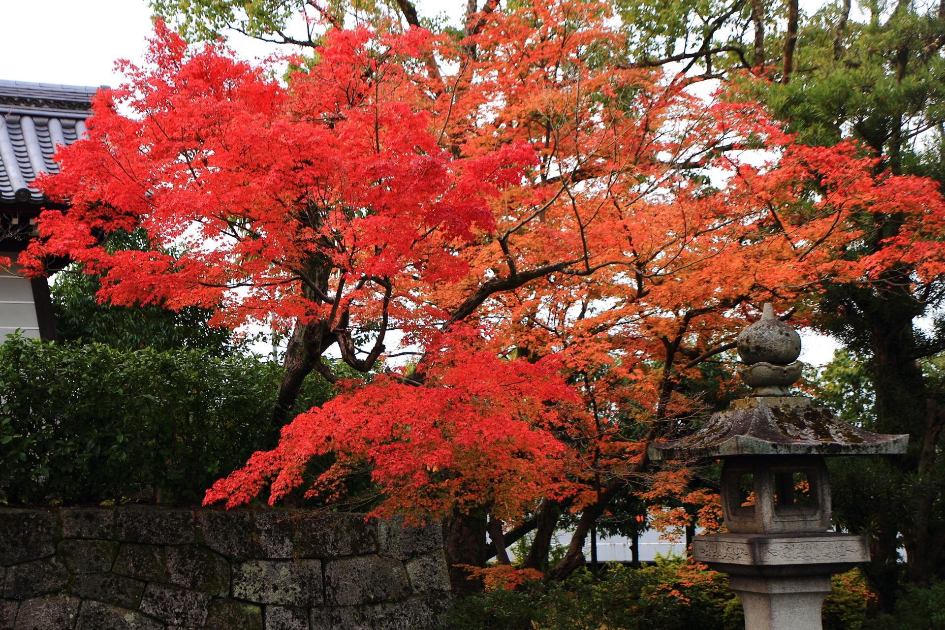 大谷本廟の燈籠と石垣を彩る鮮やかで多彩な紅葉
