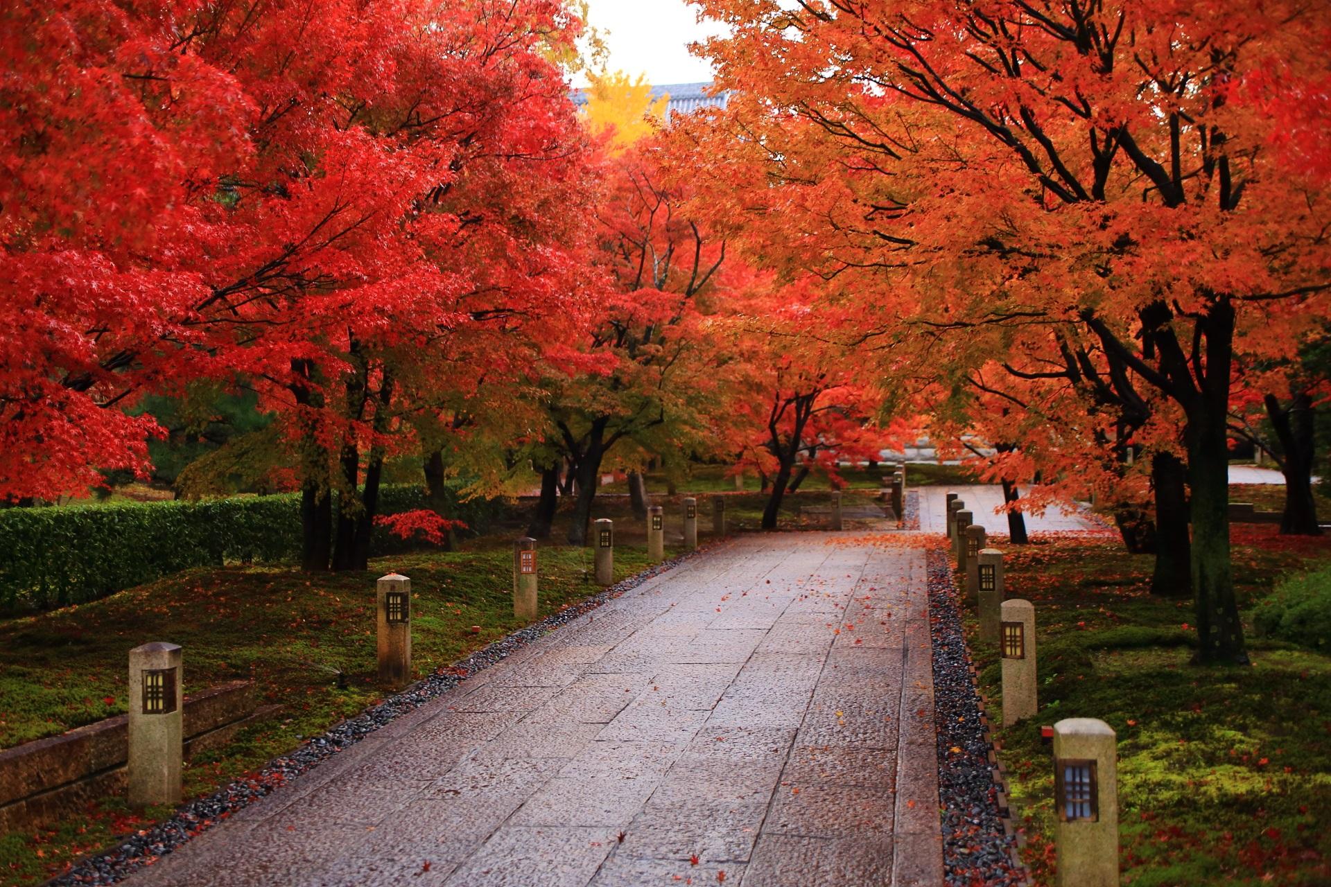 智積院の溢れる赤やオレンジの鮮やかな紅葉