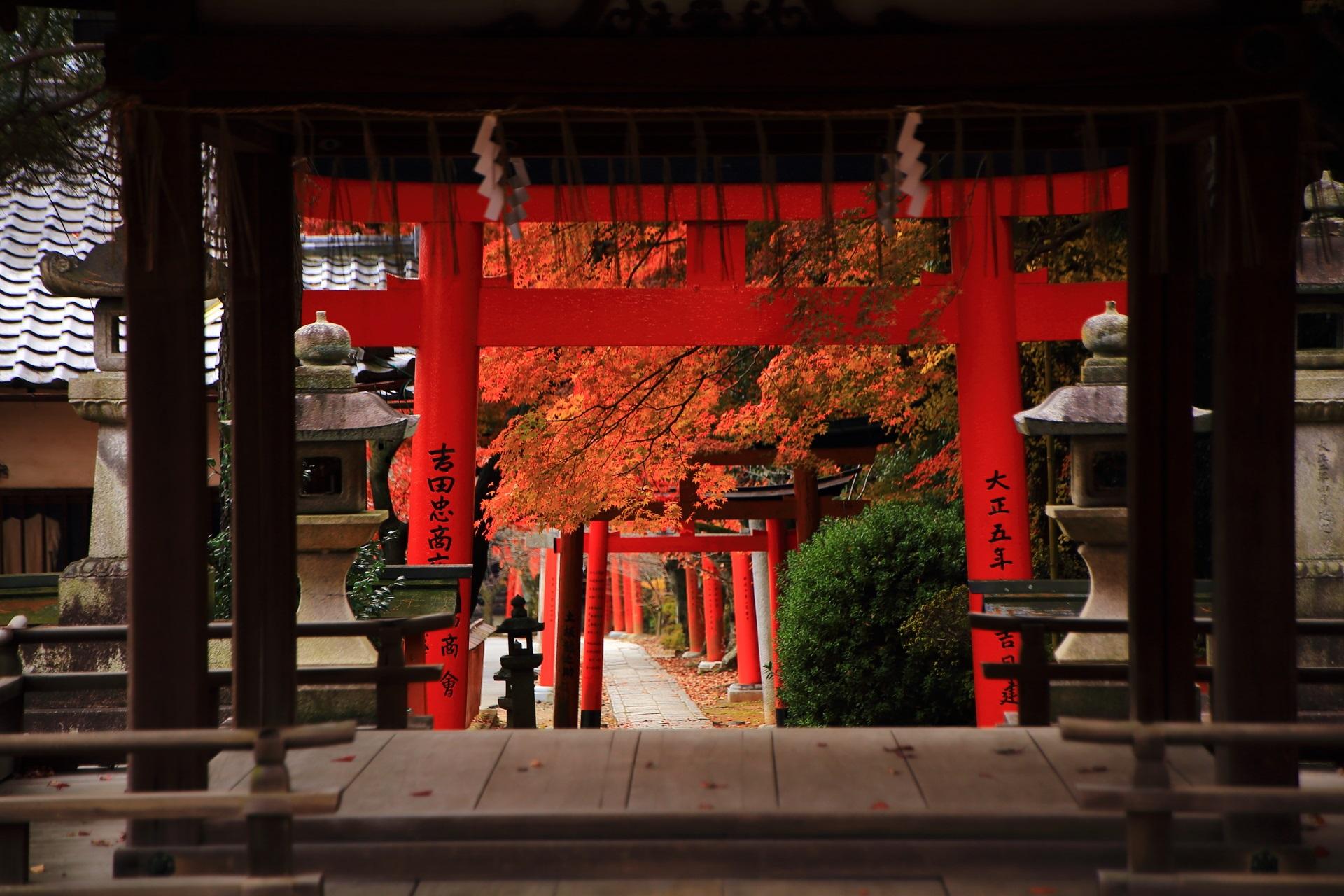 竹中稲荷神社の拝殿越しに眺めた鳥居と参道と鮮やかな紅葉
