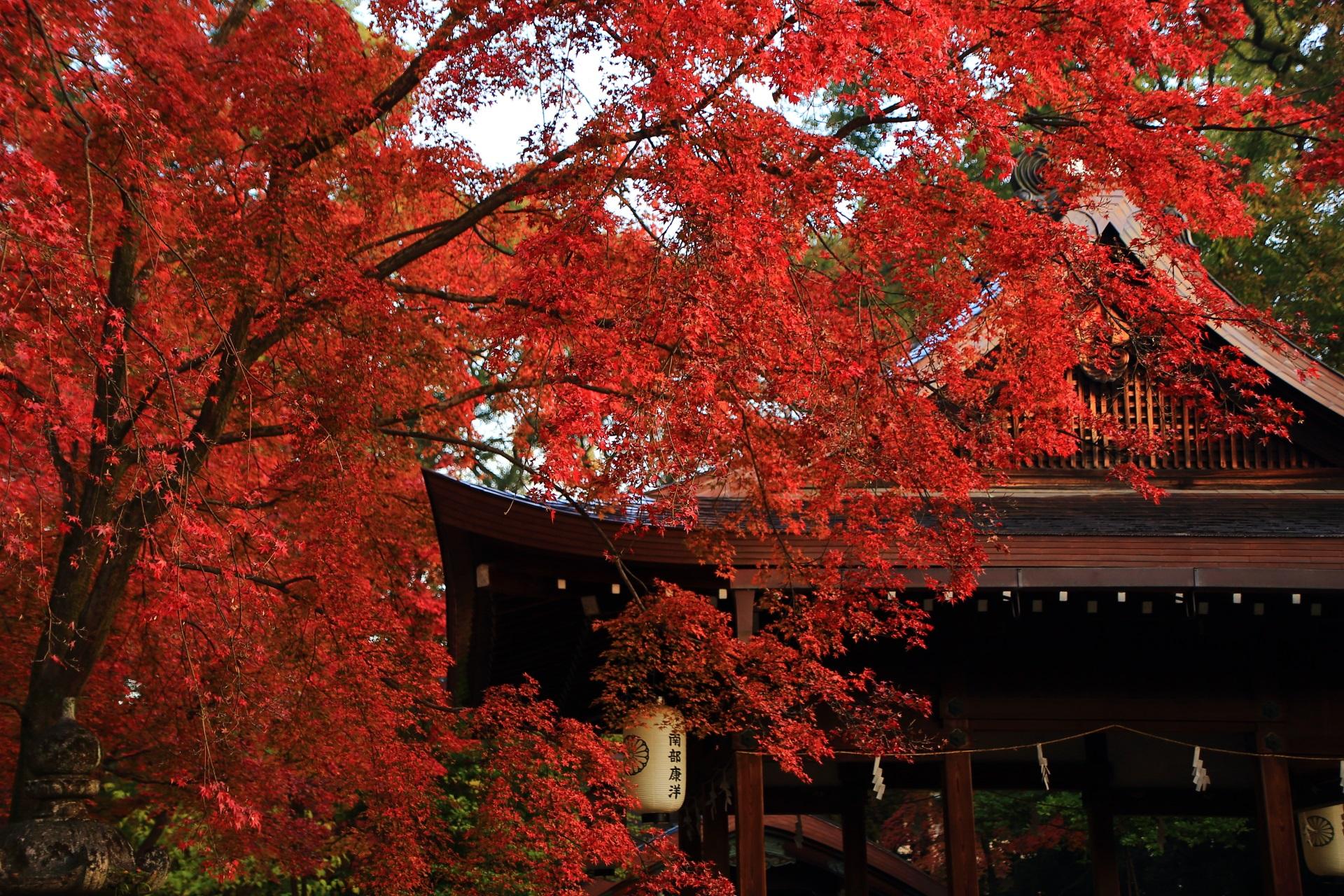 拝殿に降り注ぐような真っ赤な紅葉