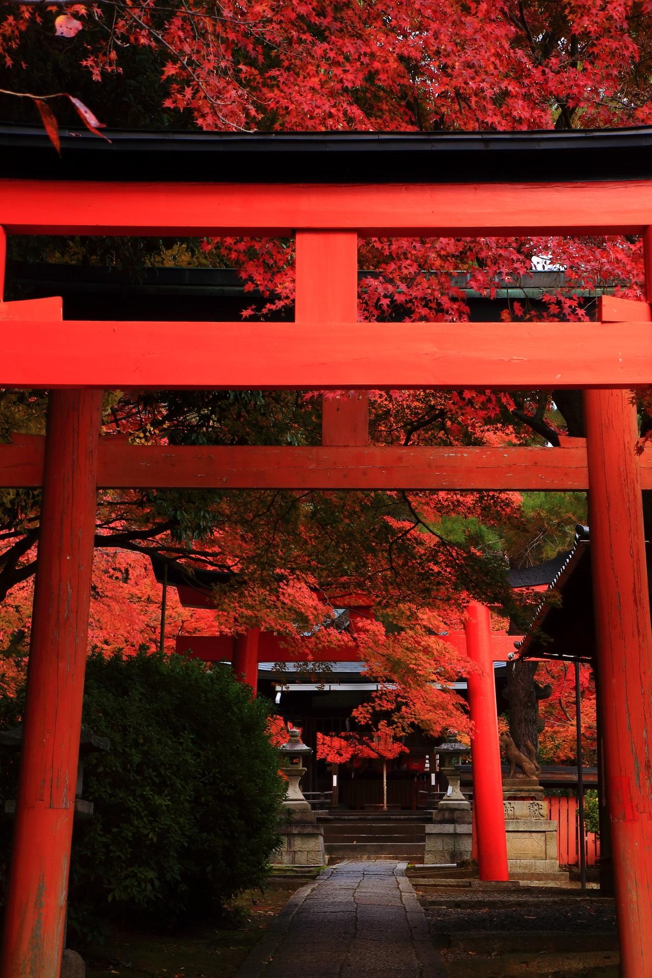 竹中稲荷神社の鳥居と紅葉の絵になる秋の風景