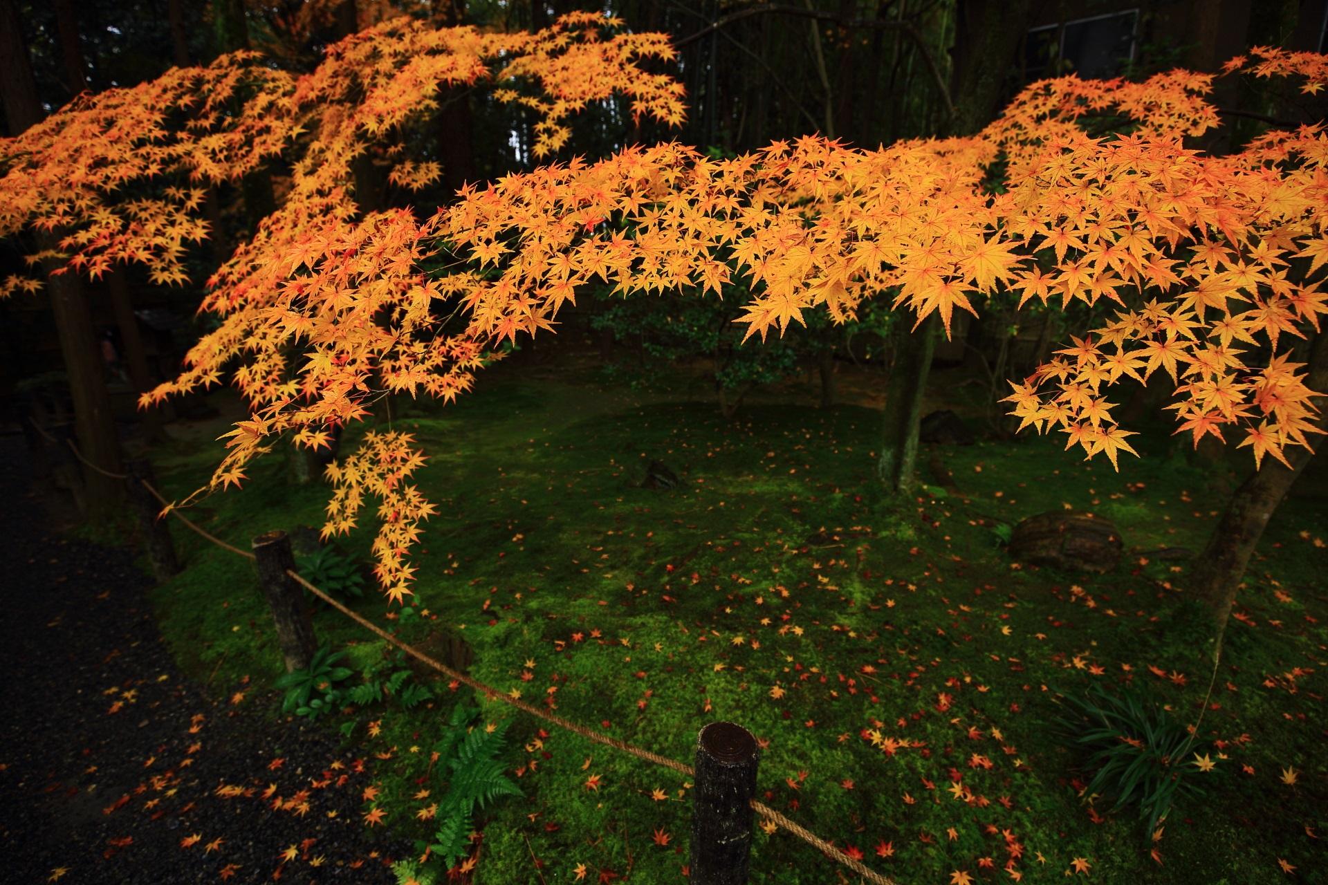 桂春院の静かな庭園でほのかに光るような絶品の紅葉
