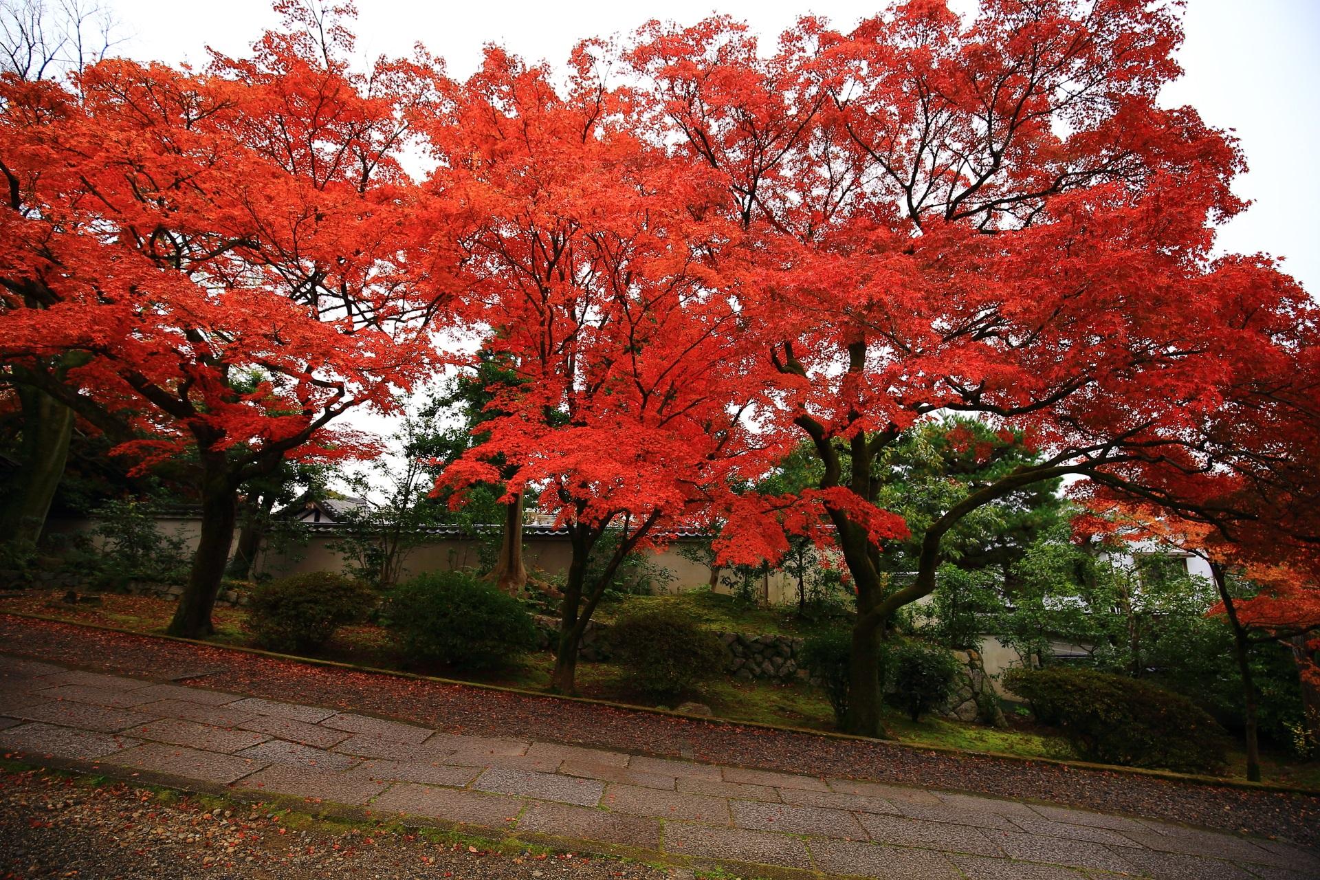 何本かの木で織り成す豪快な秋の空間