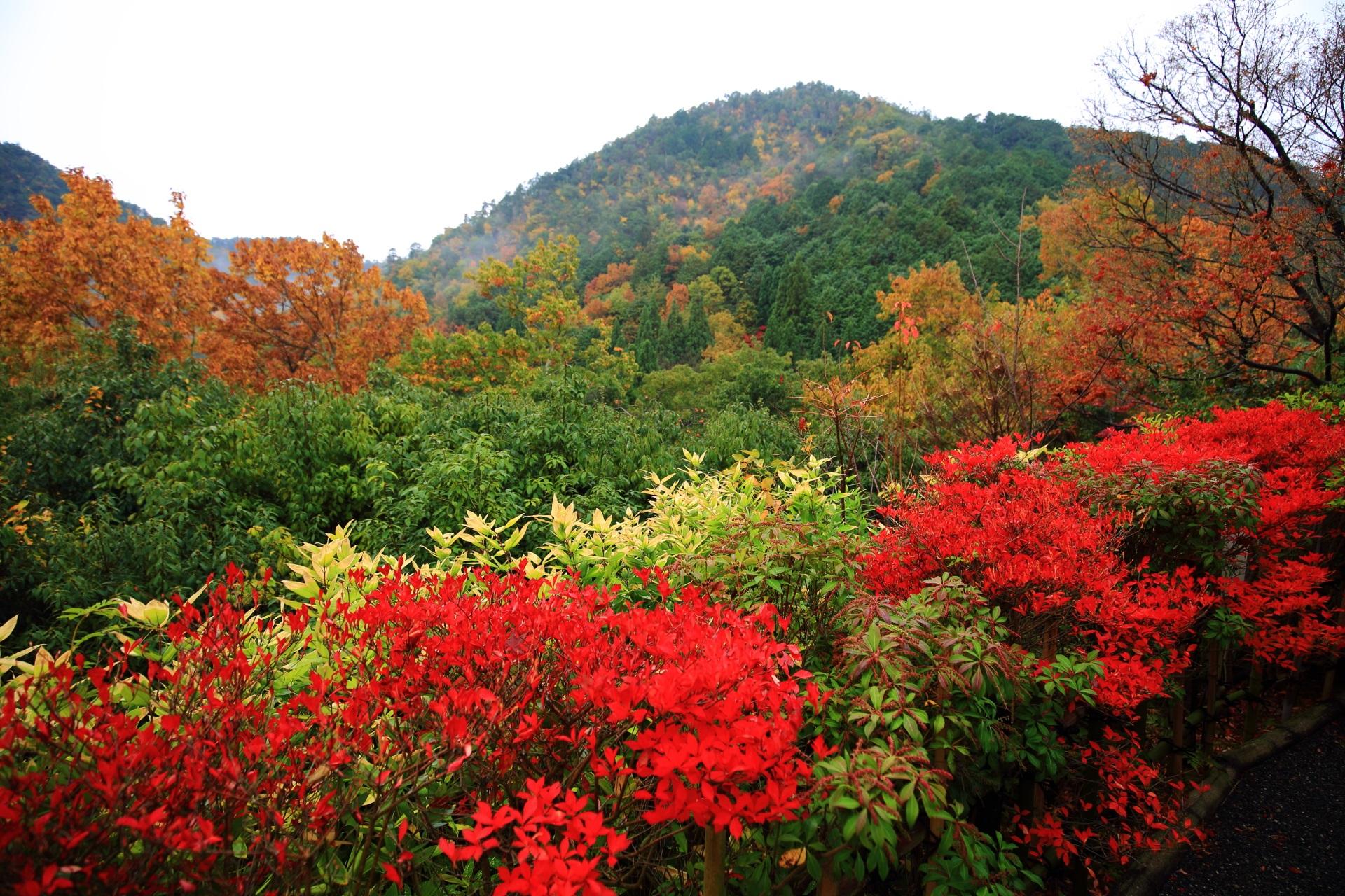 光悦寺から眺めた秋の鷹峰三山
