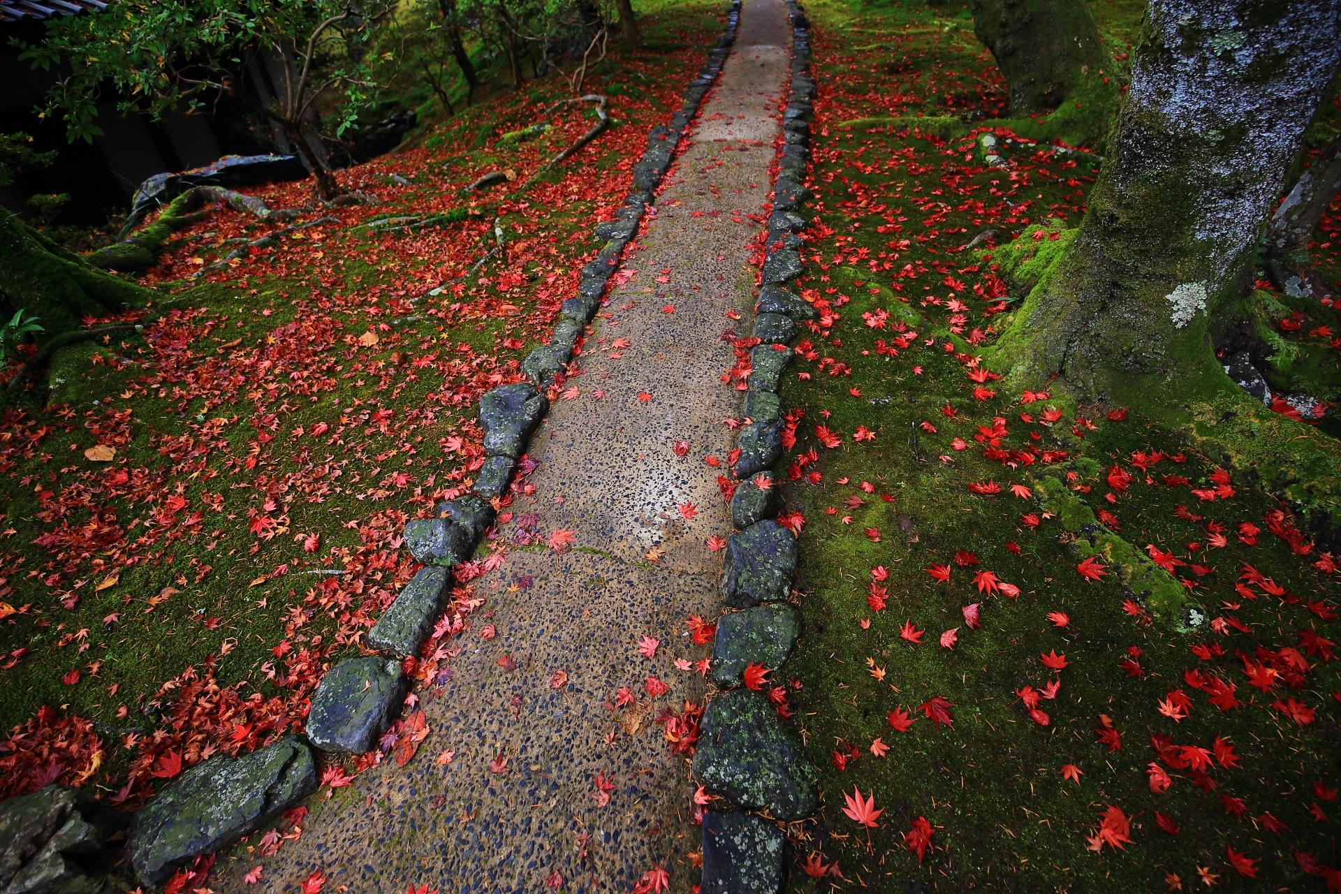 赤い散り紅葉が艶やかに染める苔や参道