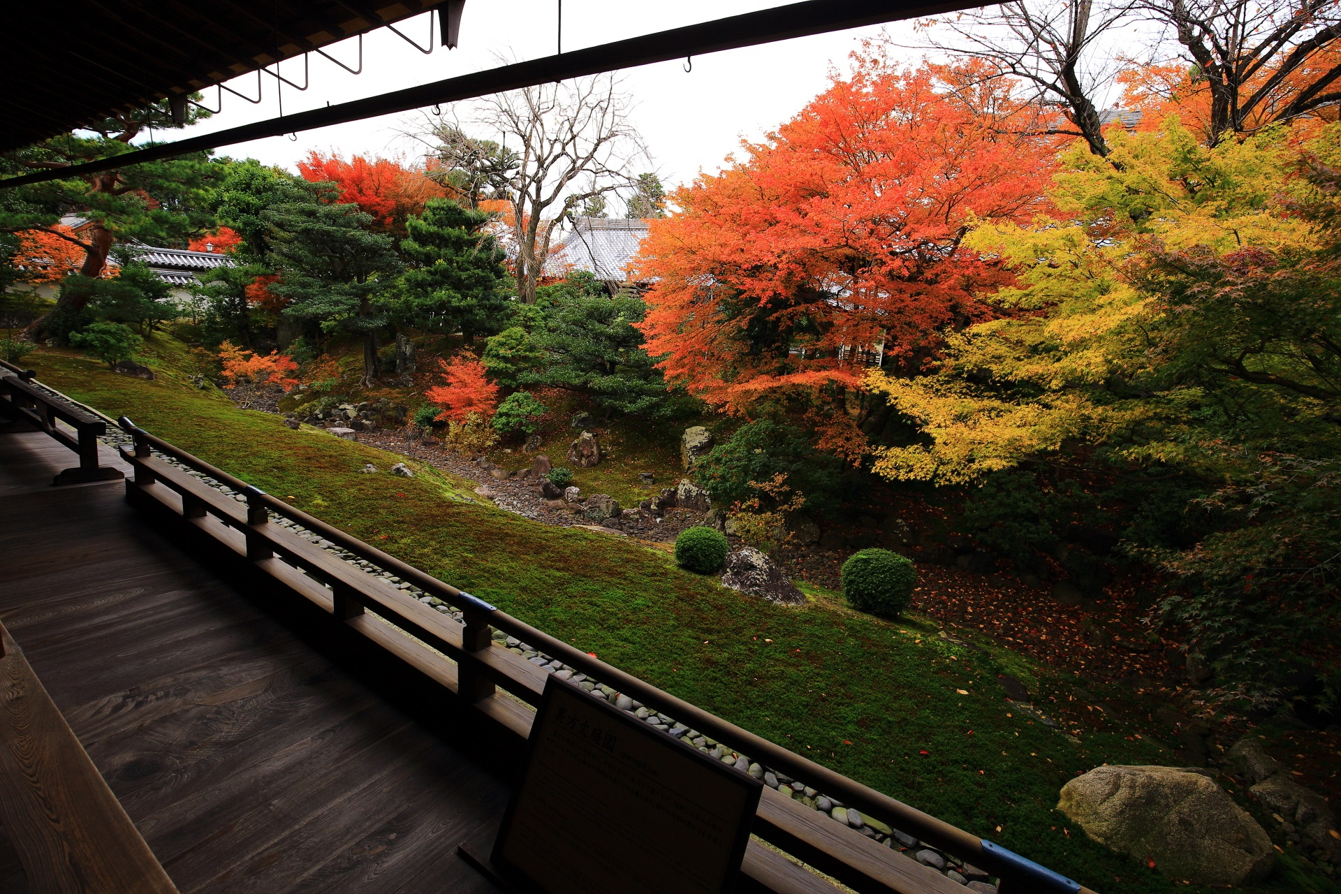 雅で上品な彩りにそまる秋の裏方丈庭園