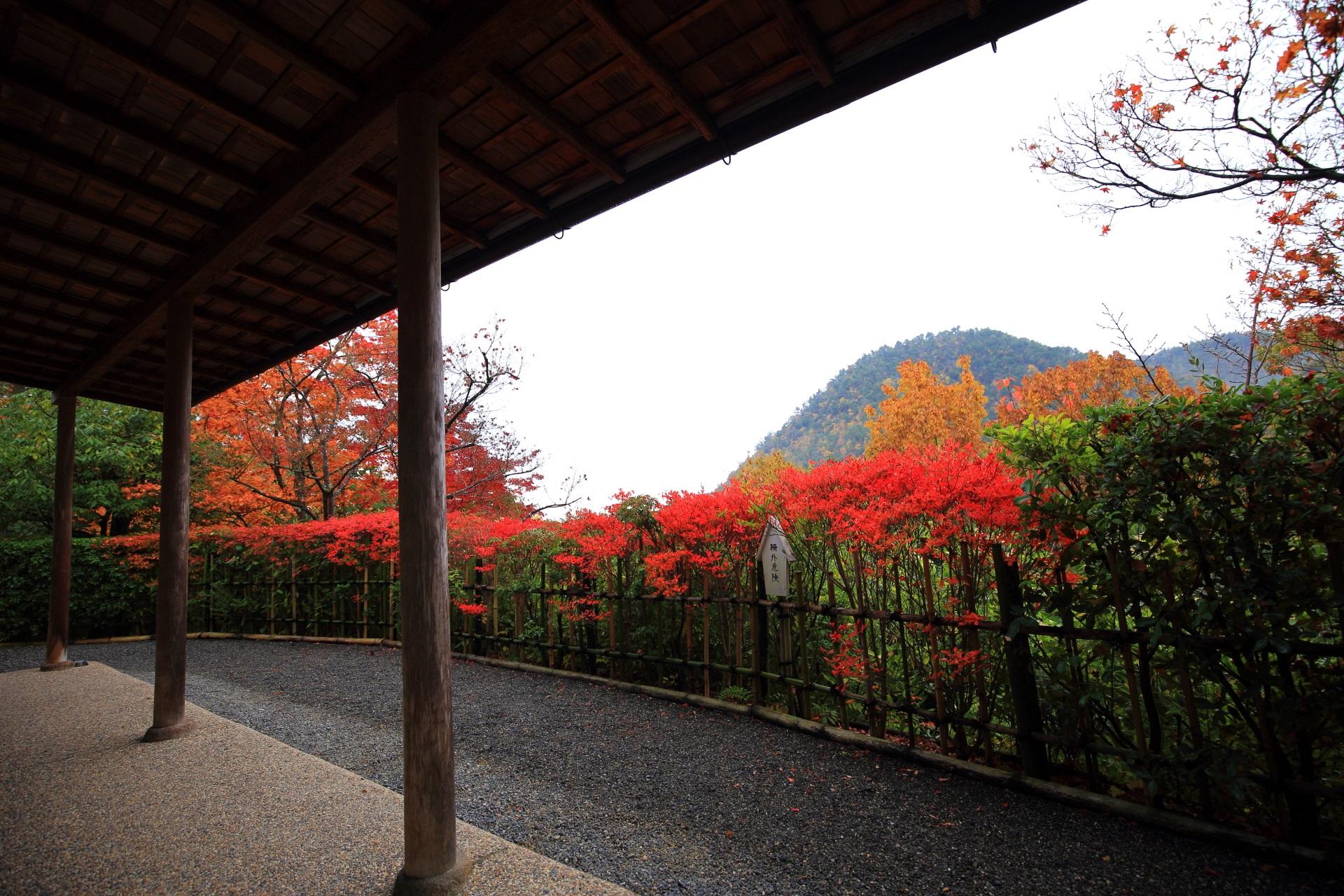 紅葉に彩られた鷹峰