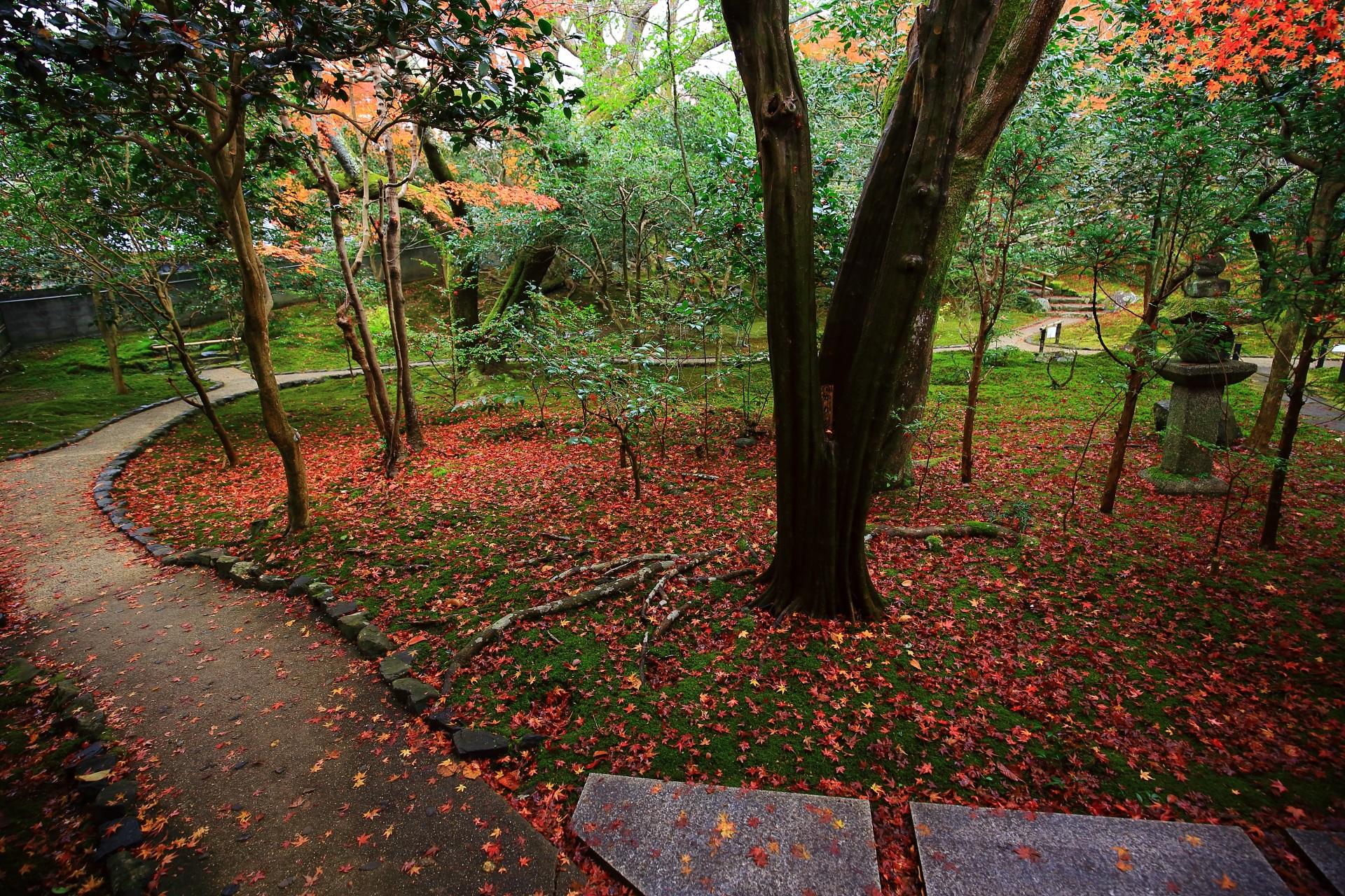 多種多様な緑や木々を彩る綺麗な散り紅葉