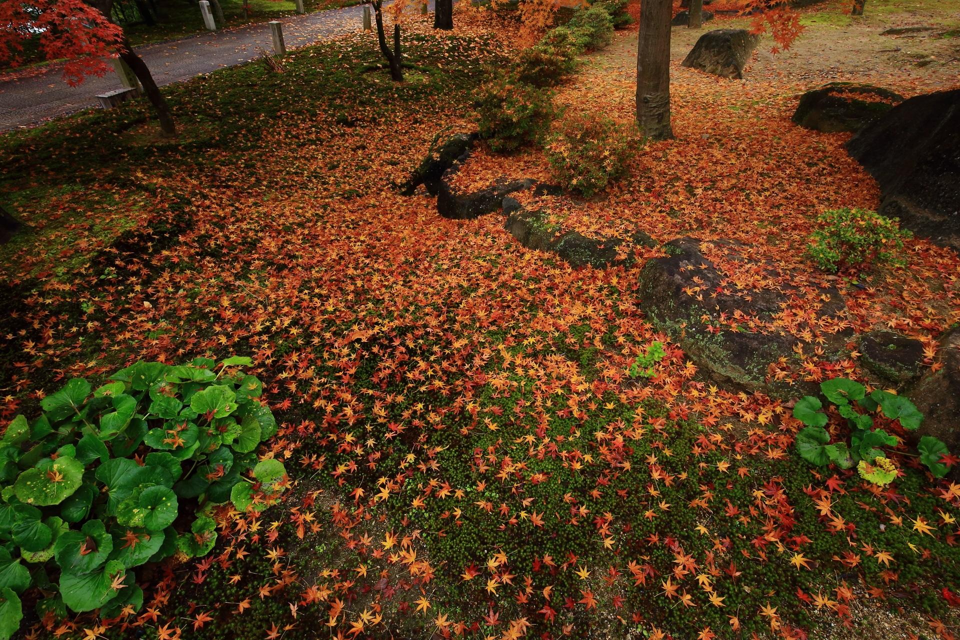 智積院の緑の苔や植物を賑やかに華やぐ多彩な散りもみじ