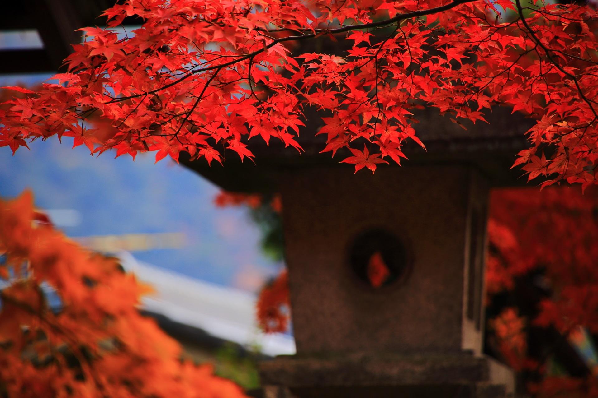 これ以上ないくらいの色づきの燈籠を彩る真っ赤な紅葉