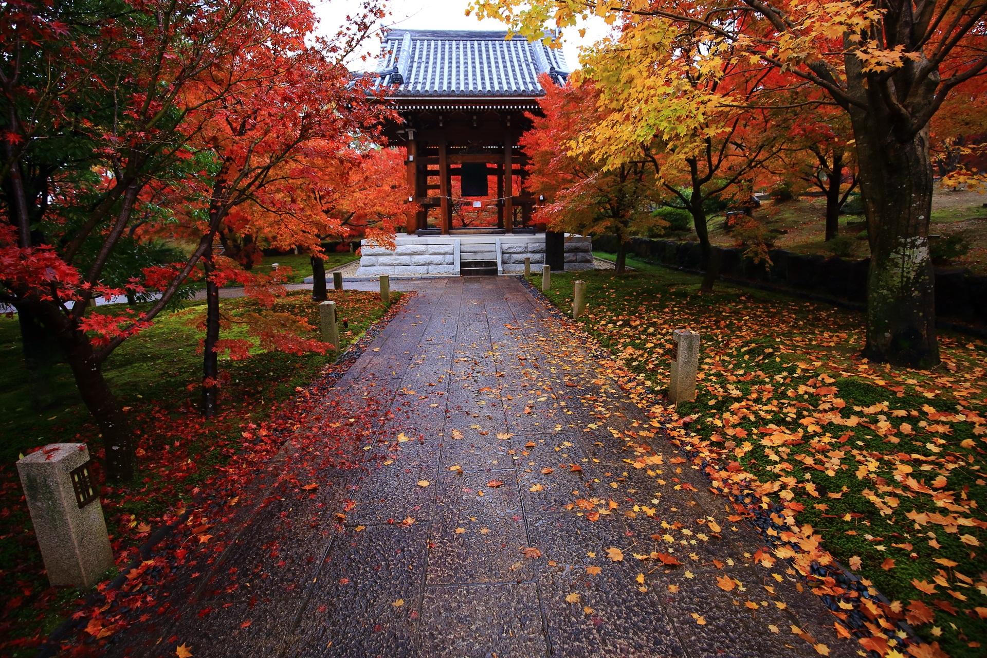 智積院の一生もんの色鮮やかな極上の紅葉と散りもみじ
