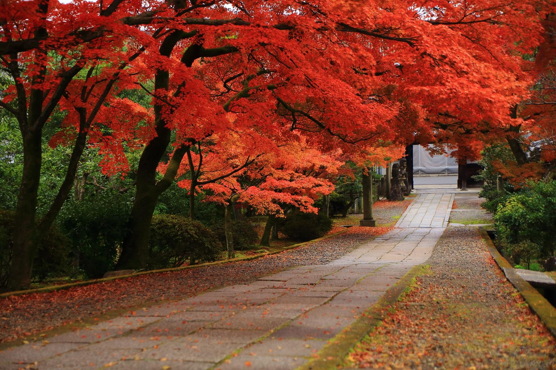 見事な秋色に染まる緩やかな坂の参道