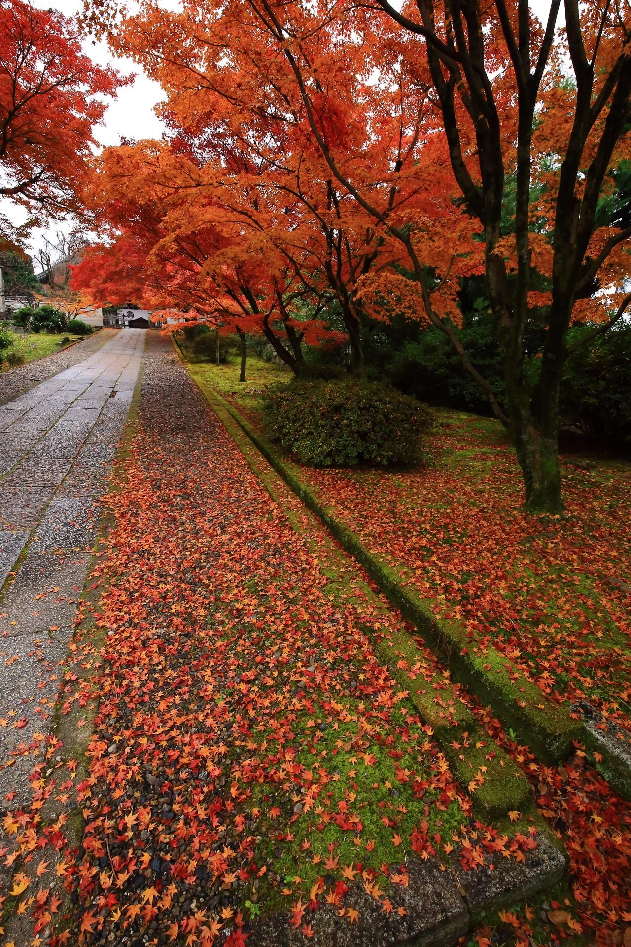 養源院の素晴らしい散り紅葉と晩秋の情景